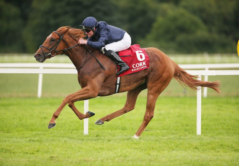 Sizzling (Galileo) winning the G3 Give Thanks Stakes at Cork