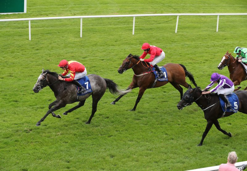 Speak In Colours (Excelebration) winning the G3 Phoenix Sprint at the Curragh