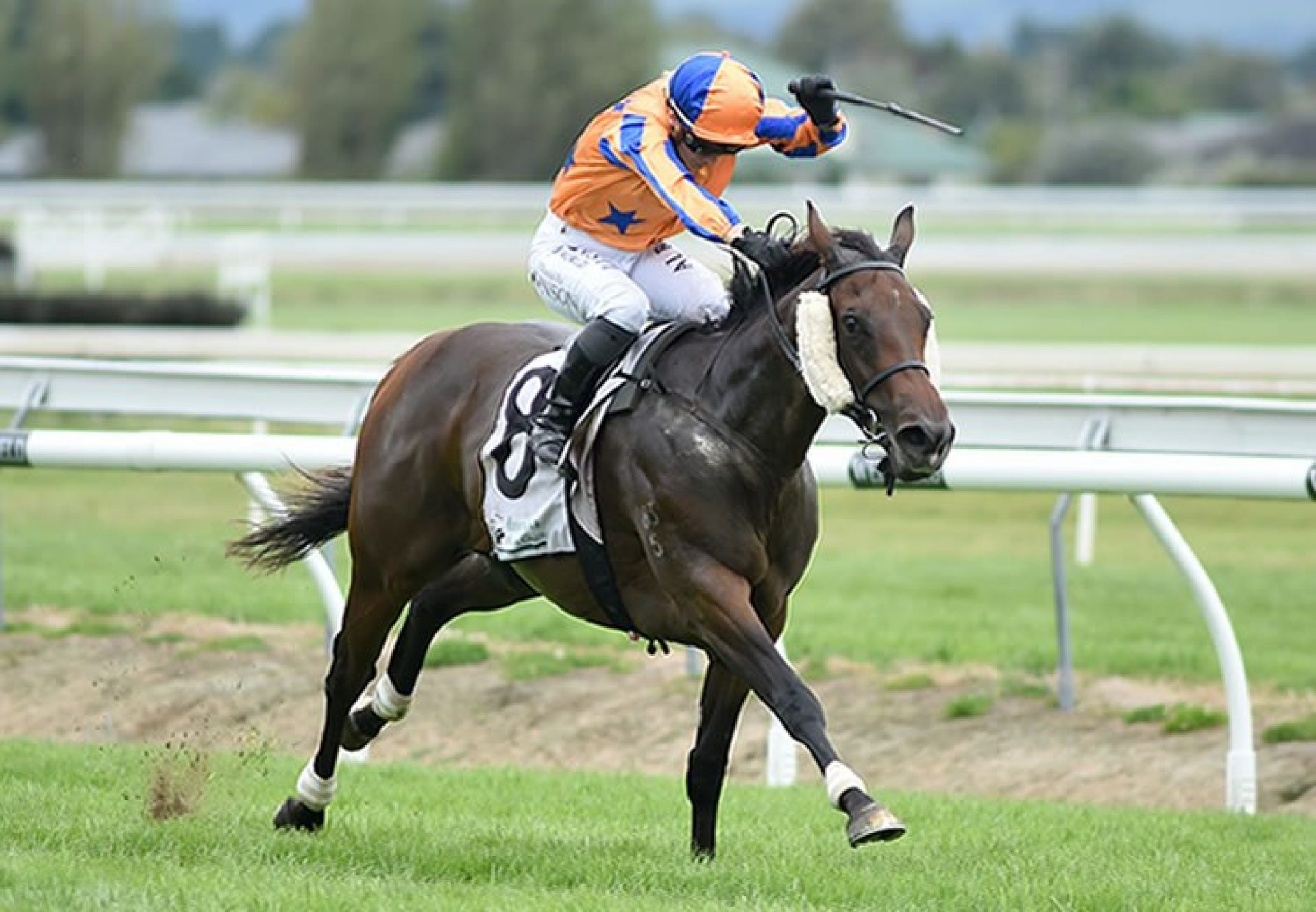 Avantage (Fastnet Rock) winning the G1 Manawatu Sires' Produce Stakes at Awapuni