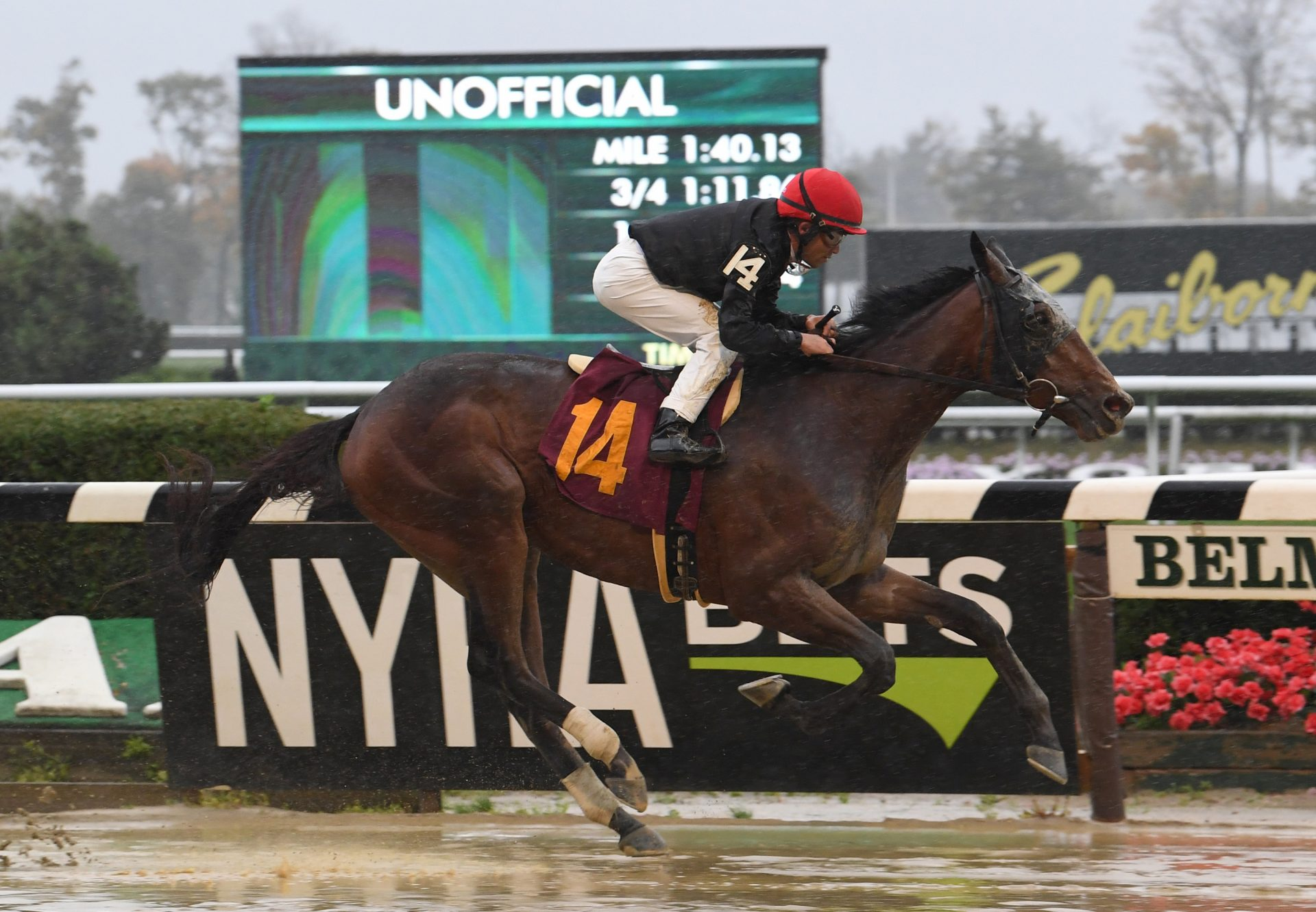 Amends (Uncle Mo) winning his maiden at Belmont Park