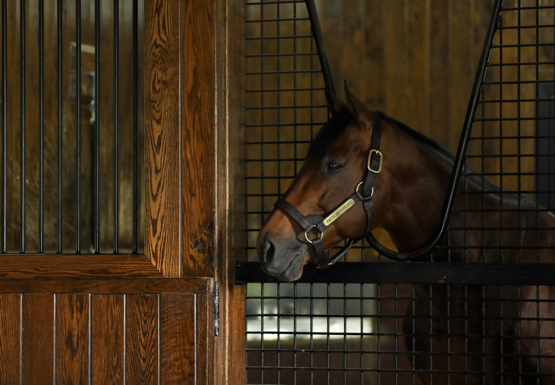 American Pharoah Website