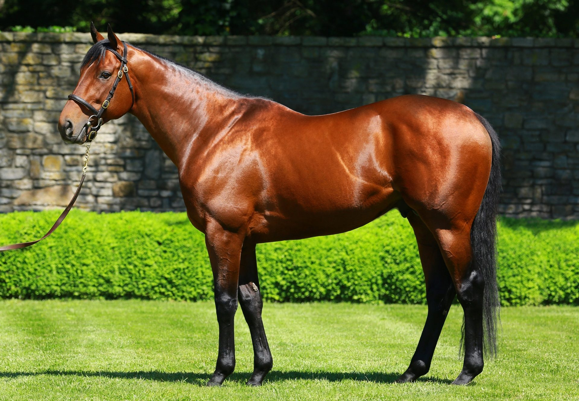 American Pharoah conformation