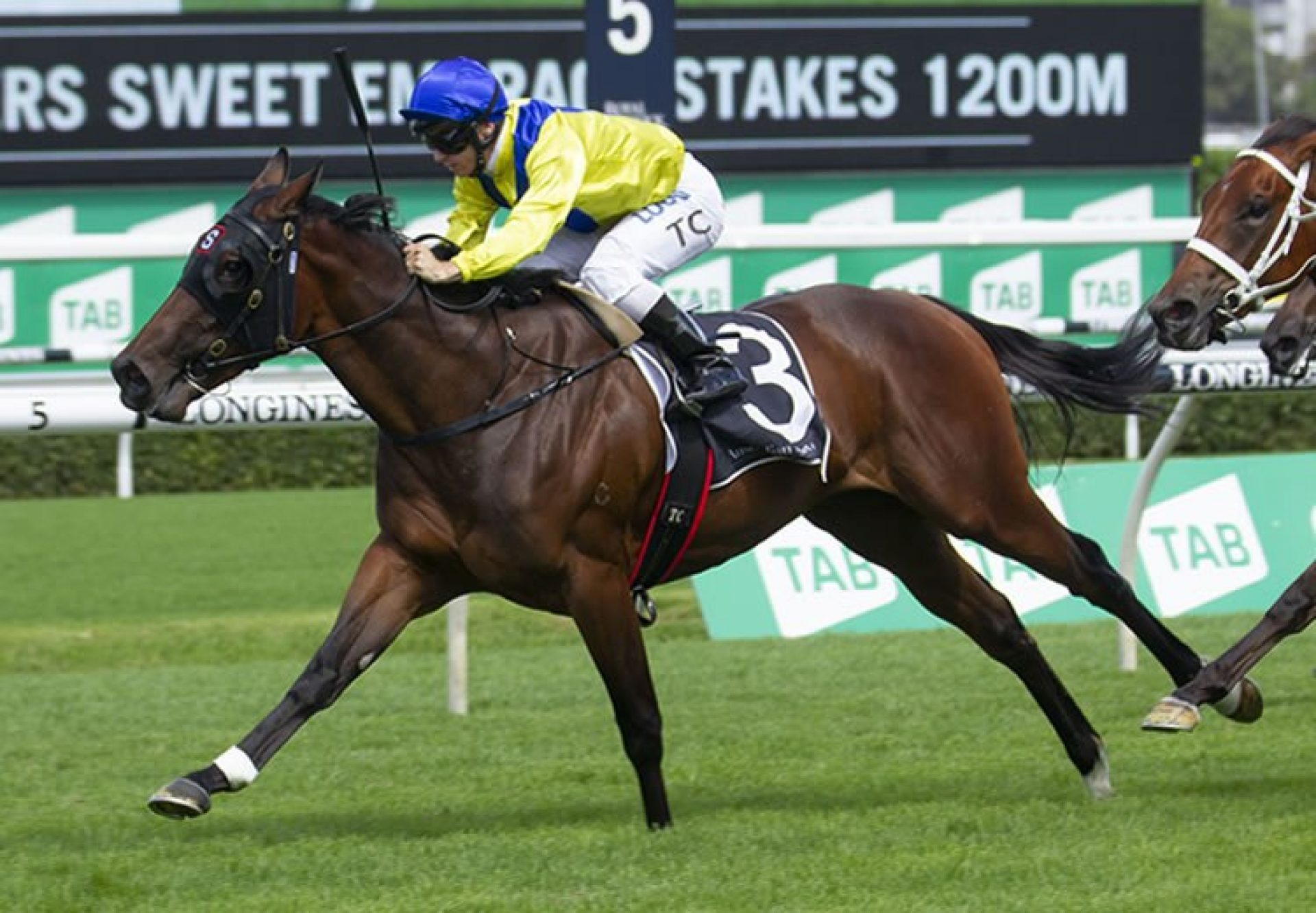 Anaheed (Fastnet Rock) winning the ATC Victory Vein Plate at Randwick