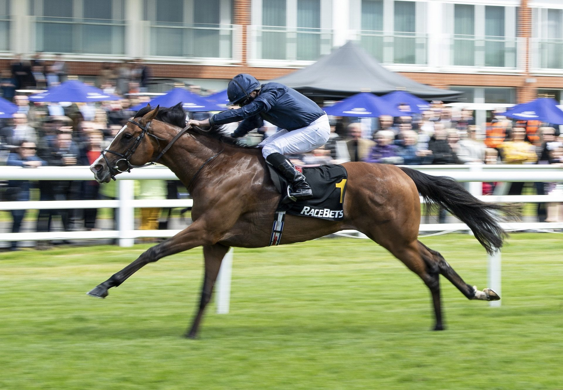 Anthony  Van  Dyck Leads Home 1 2 For  Galileo In  Derby  Trial