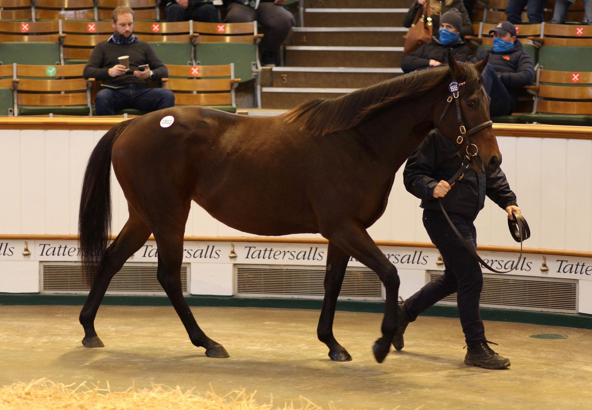 Aperitif Sells In Foal To Ten Sovereigns at Tattersalls
