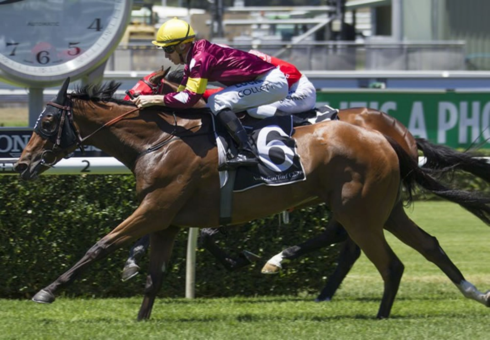 Aqua D'Ivina (Fastnet Rock) winning at Randwick