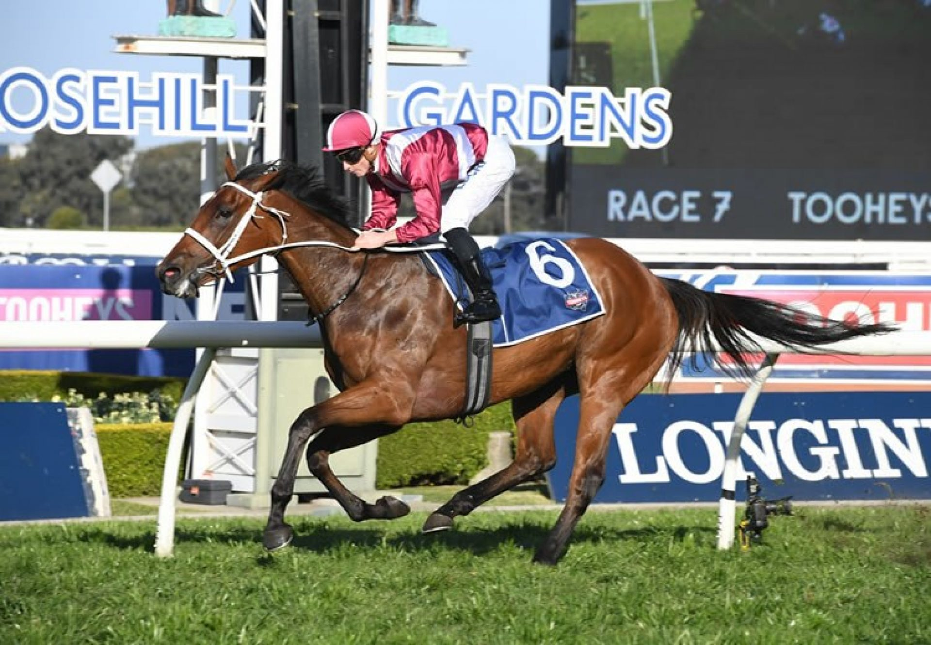 Arcadia Queen (Pierro) winning the Gr.2 Theo Marks Stakes at Rosehill
