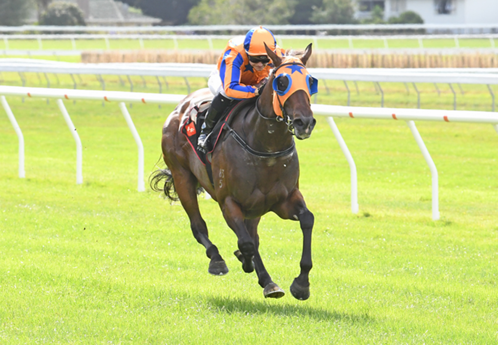 Avantage (Fastnet Rock) winning the Gr.1 Otaki Stakes