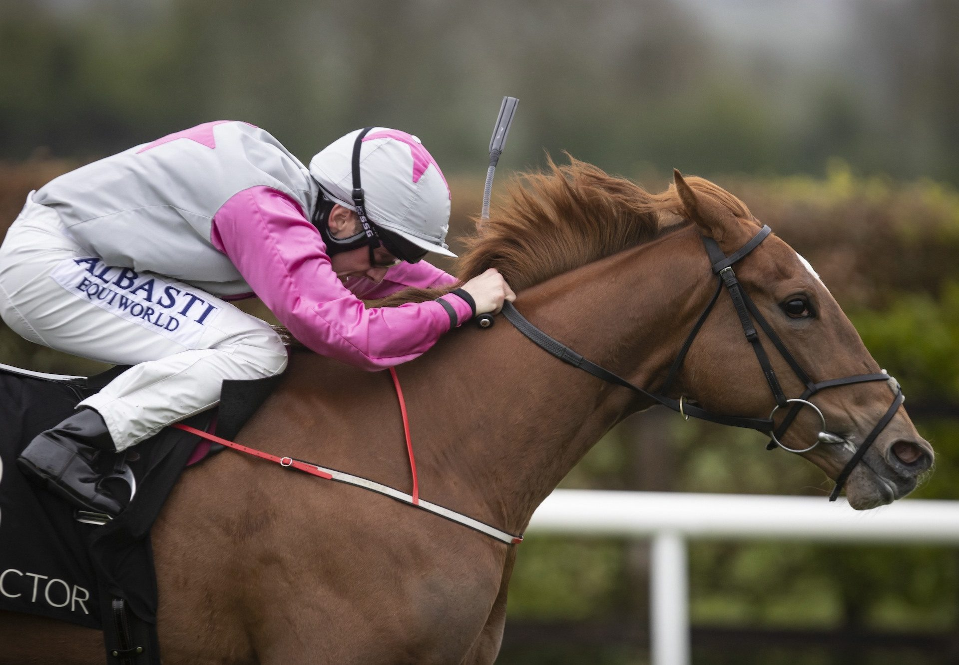 Back To Brussels (Starspangledbanner) winning a fillies maiden at Navan