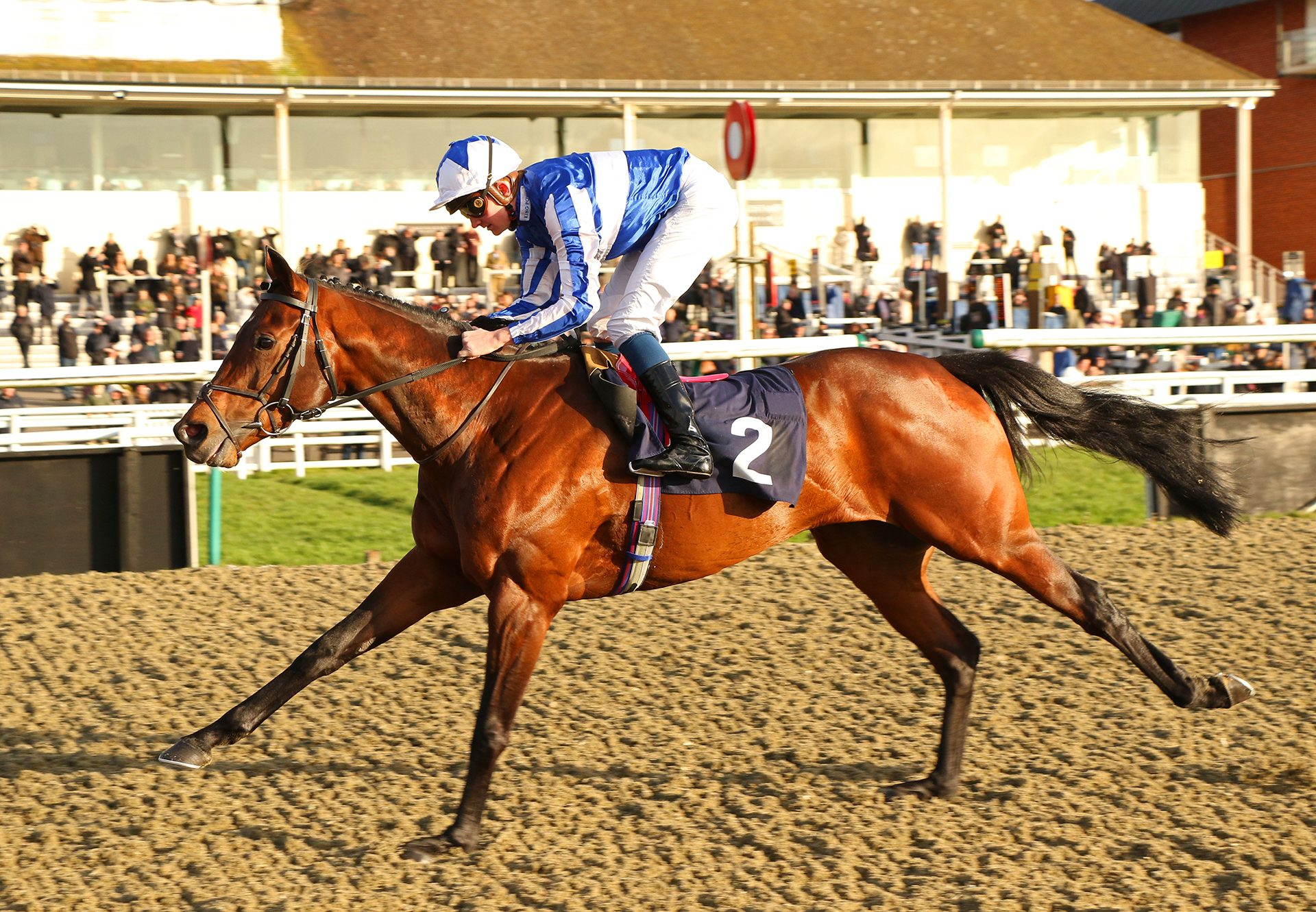 Bangkok (Australia) winning the Listed Winter Derby Trial at Lingfield