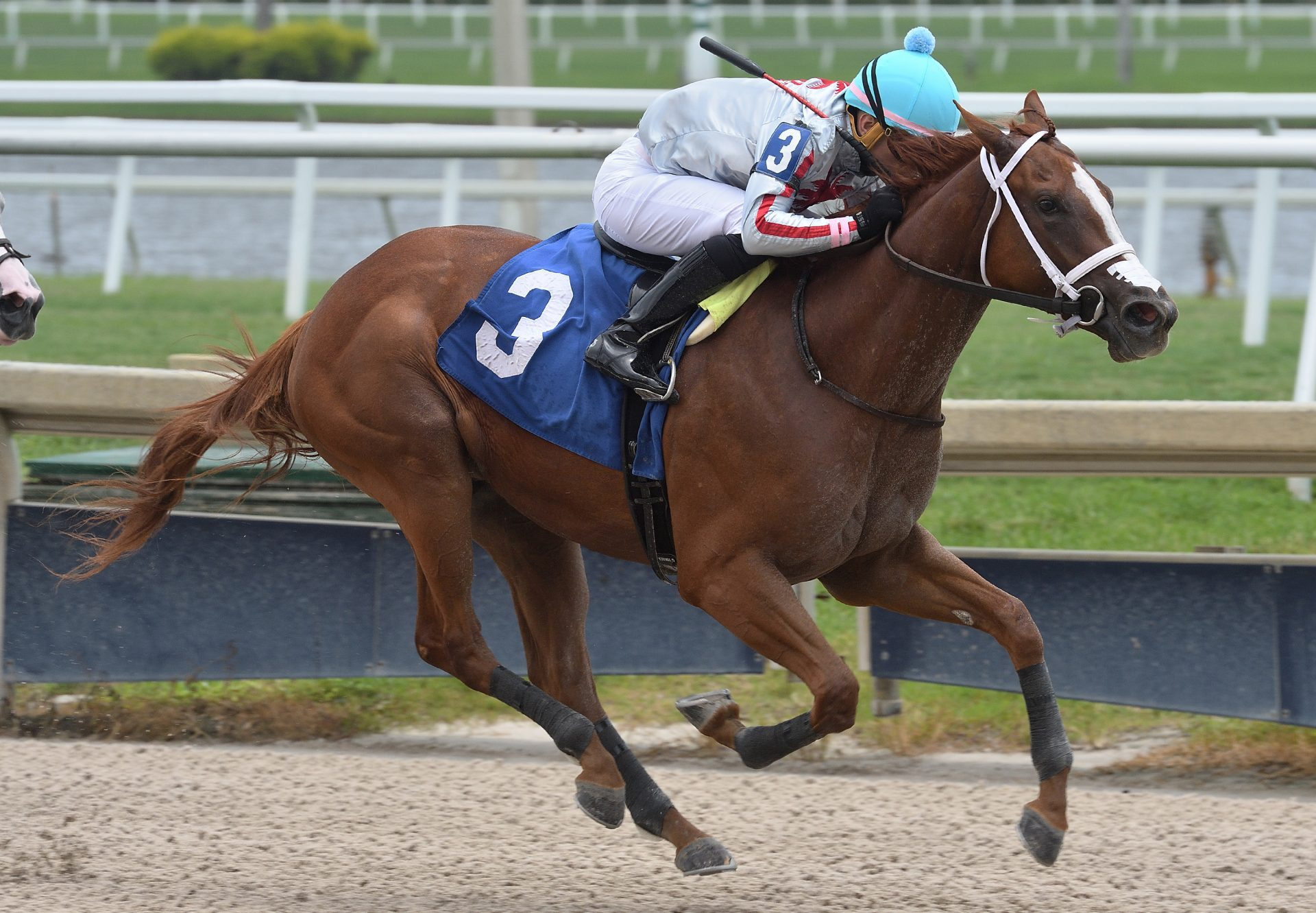 Beauty Queen (Air Force Blue) winning on debut at Gulfstream Park
