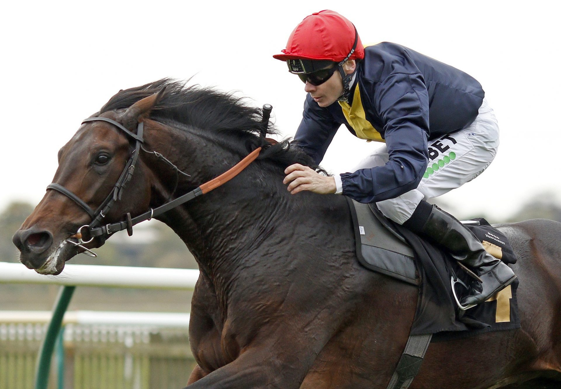Brentford Hope (Camelot) winning his maiden on debut at Newmarket