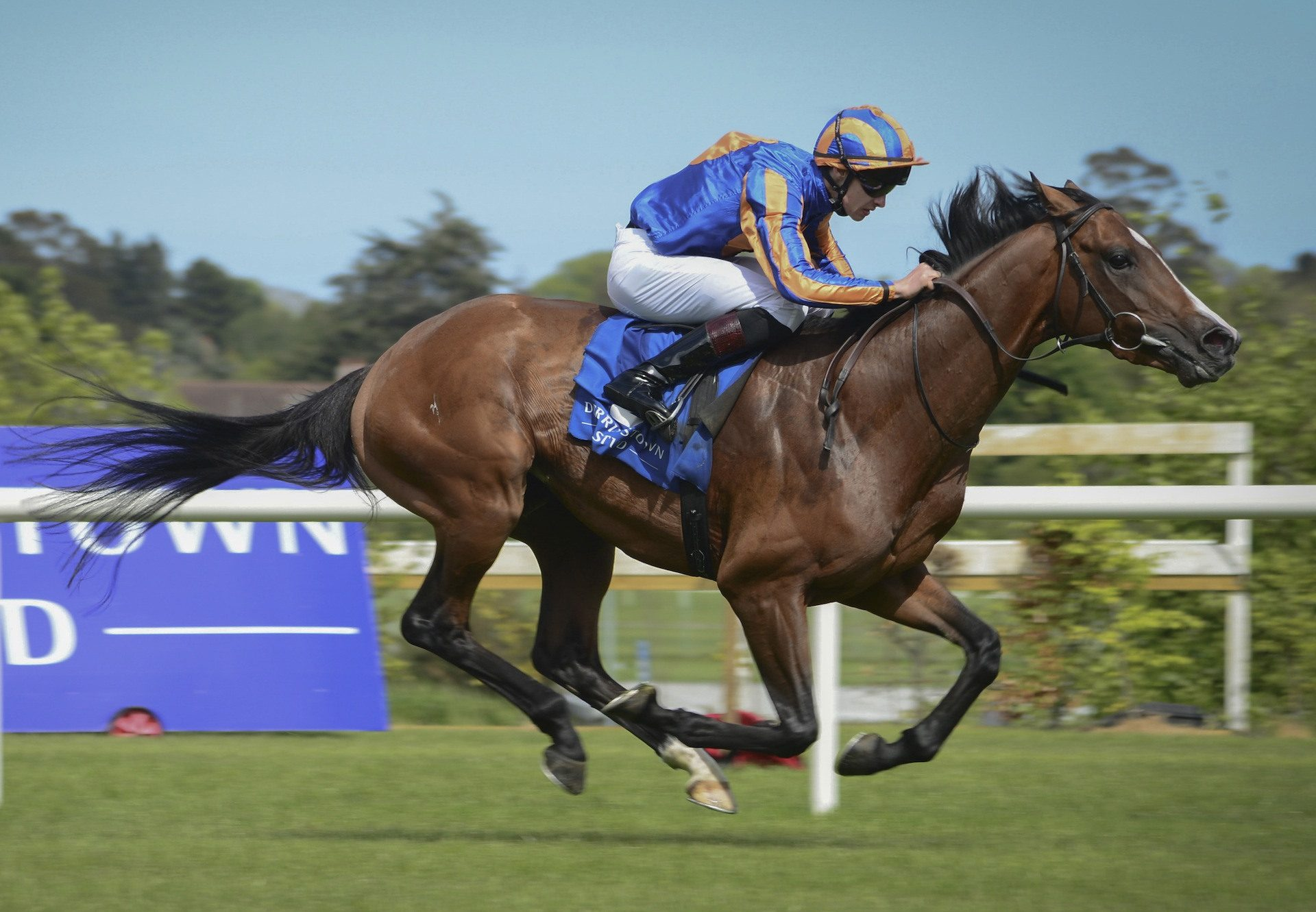 Broome (Australia) Wins The Group 3 Derby Trial At Leopardstown