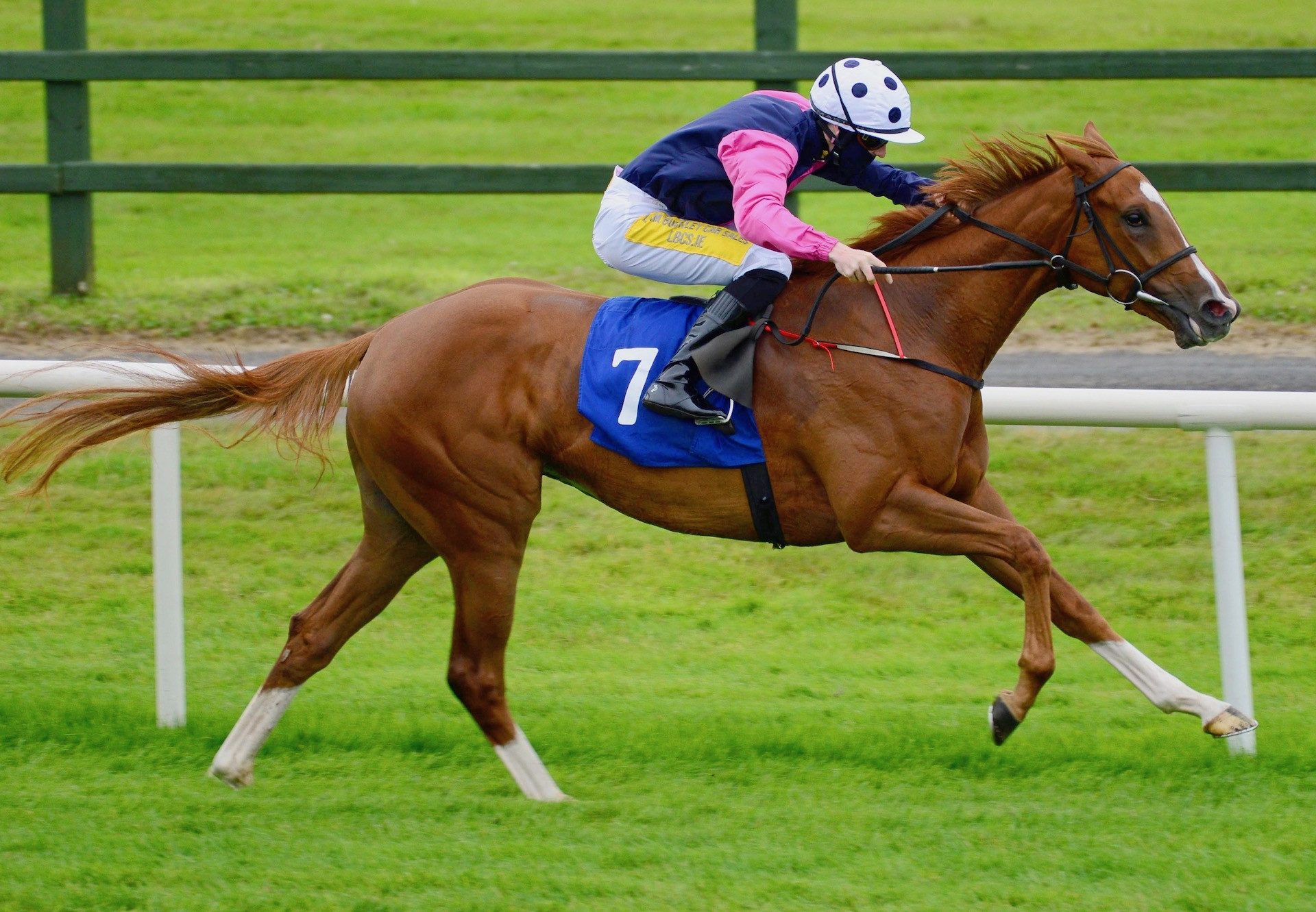 Blue Gardenia (Mastercraftsman) winning the Listed Montrose Stakes at Newmarket