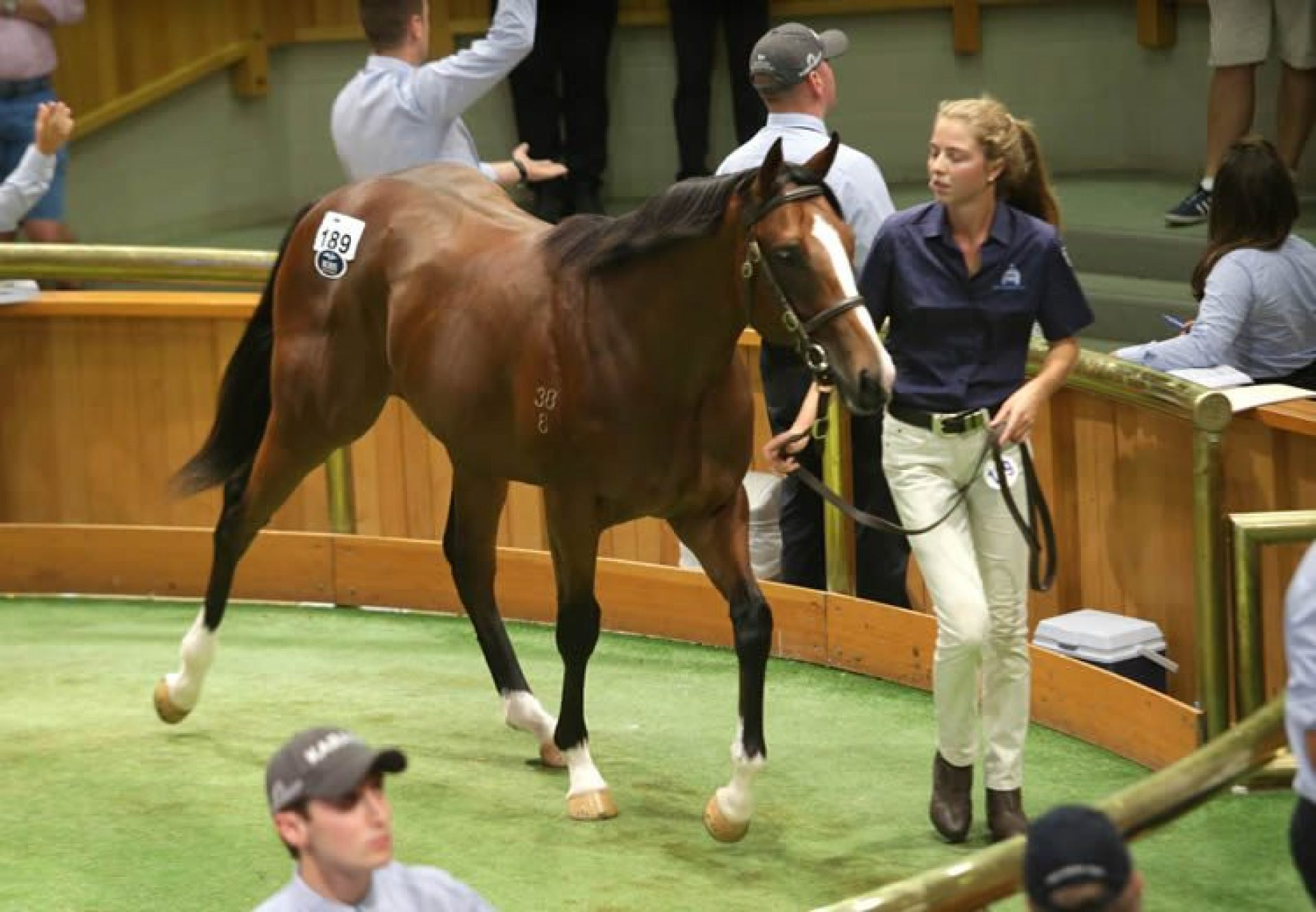 American Pharoah ex Posavina yearling colt selling for $575,000 at Karaka