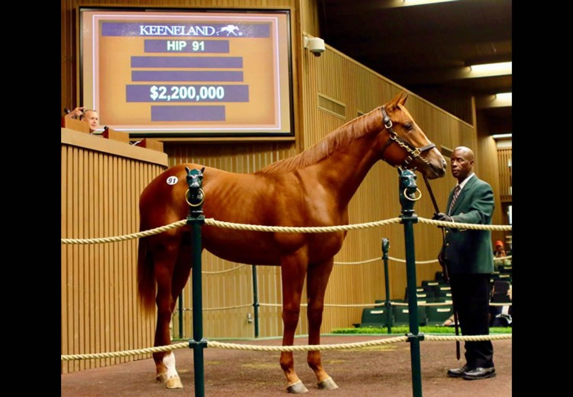 American Pharoah ex Kindle yearling colt selling for $2.2 million at Keeneland September Book 1