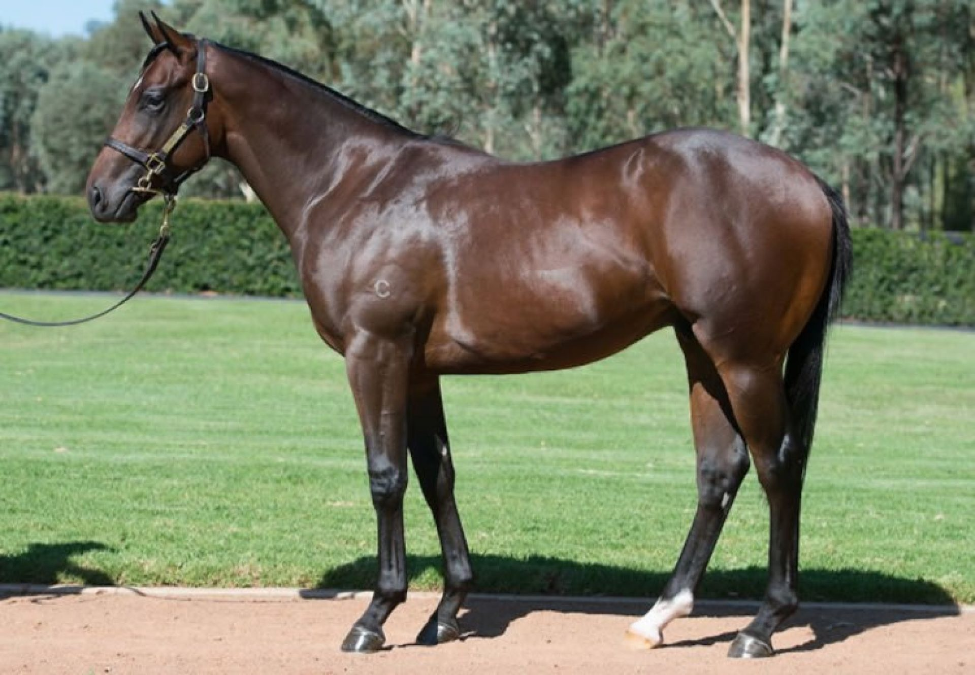 Fastnet Rock ex O'Marilyn conformation shot
