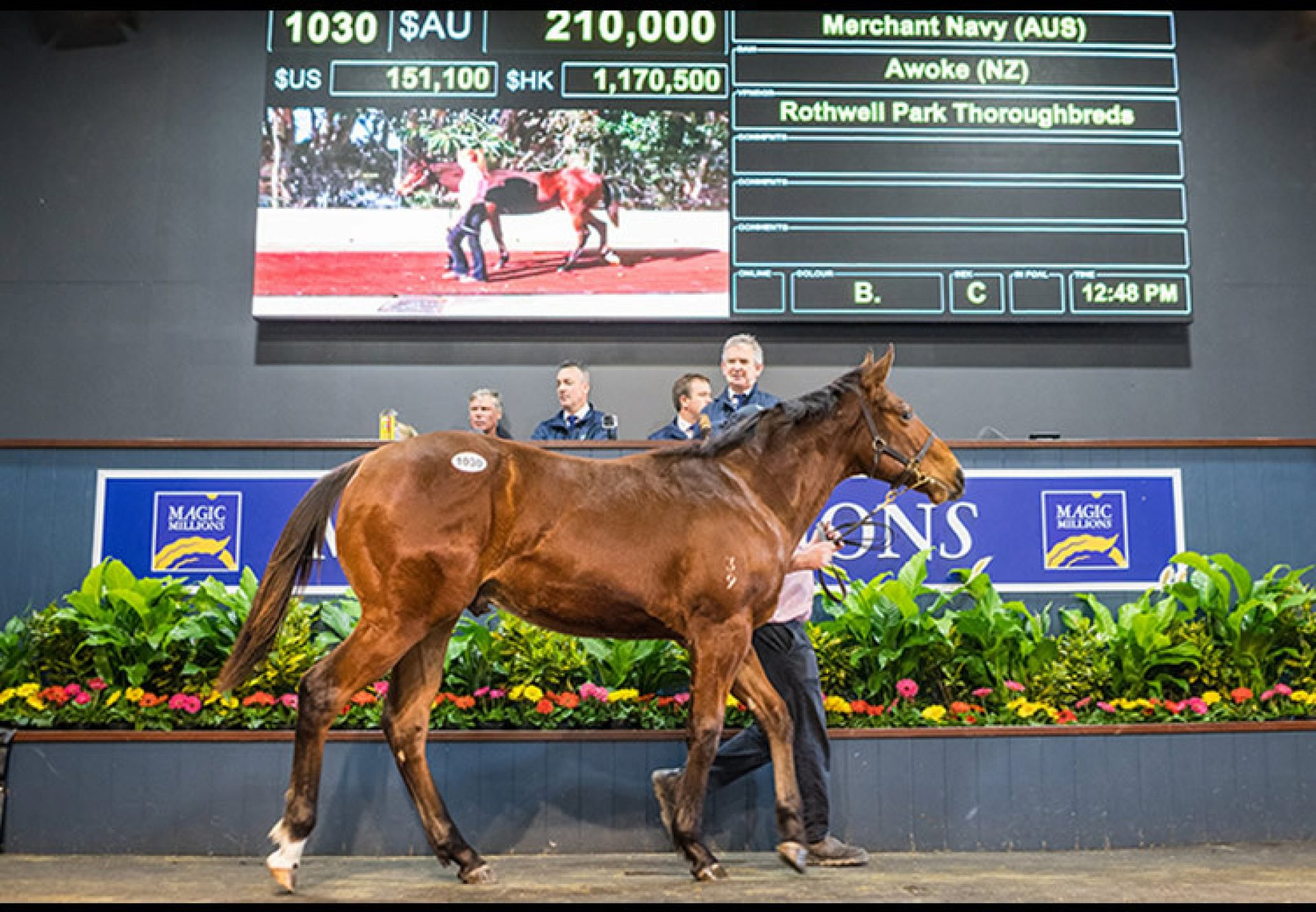 Merchant Navy ex Awoke weanling colt selling for $210,000 at the MM National Weanling sale