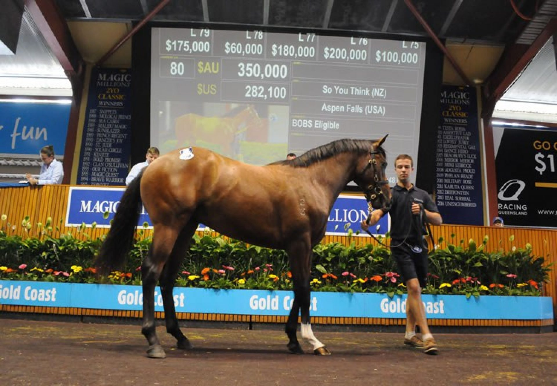 So You Think ex Aspen Falls colt selling at Magic Millions