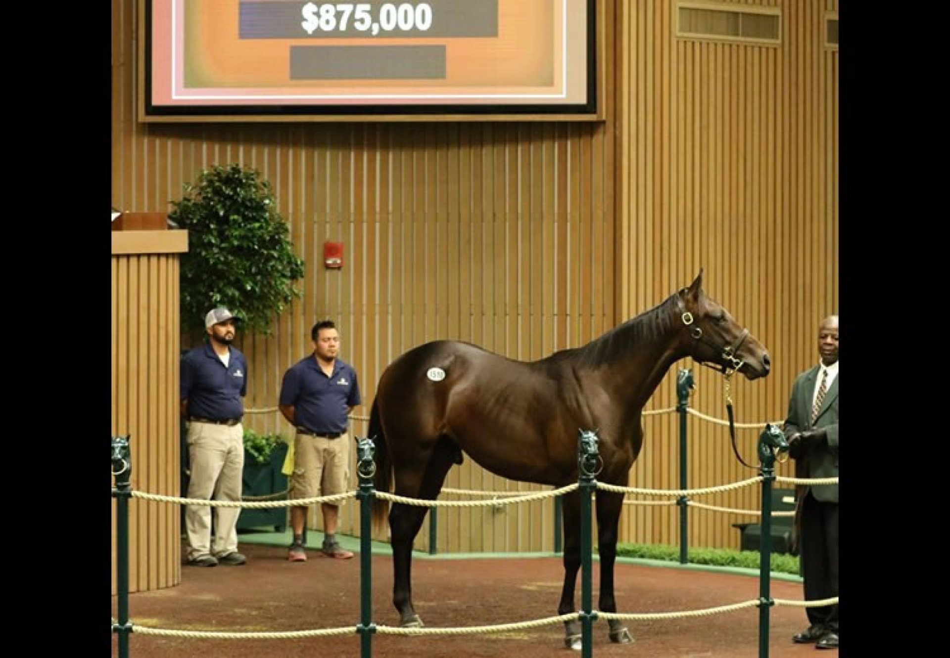 Uncle Mo ex Morena yearling colt selling for $875,000 at Keeneland
