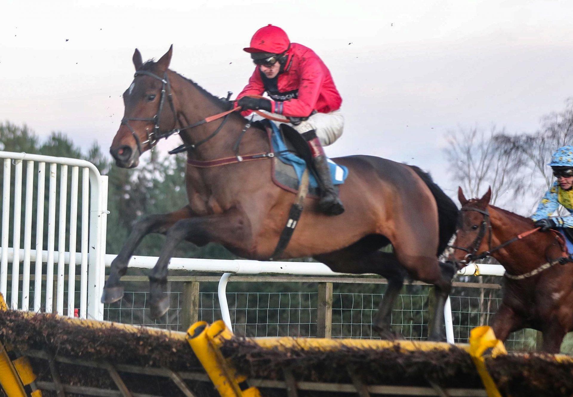Calle Malva (Getaway) Wins Her Maiden Hurdle at Hexham