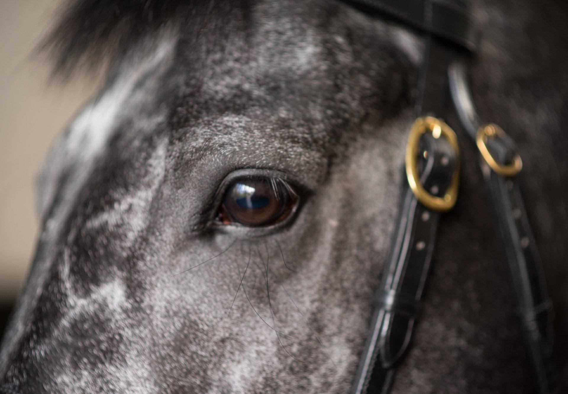 Caravaggio Close Up
