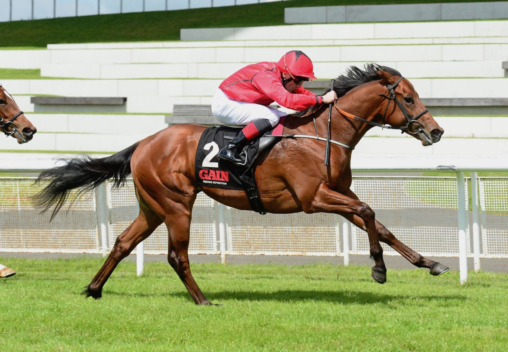 Castle Star (Starspangledbanner) Wins The Group 3 Marble Hill Stakes At The Curragh