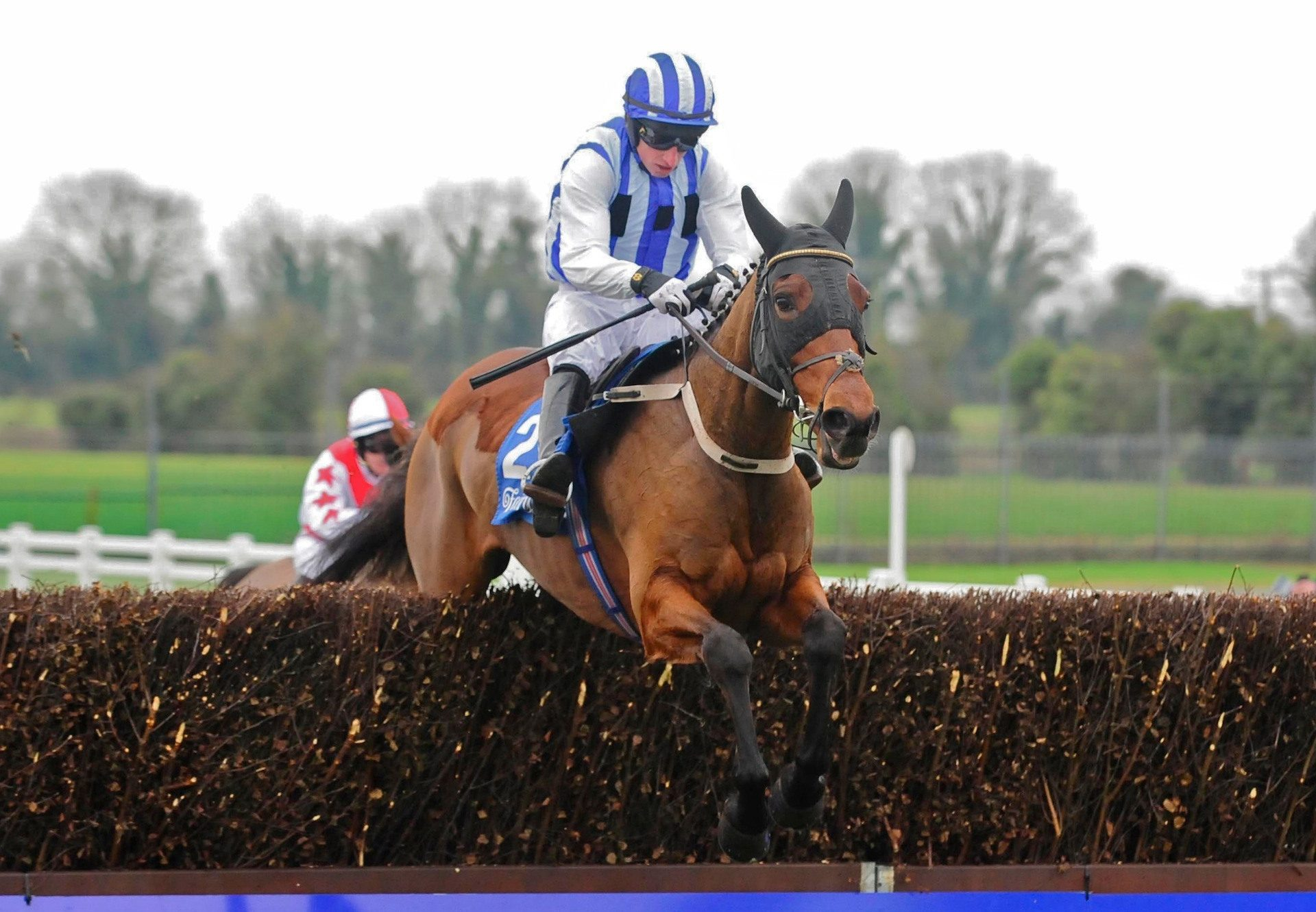 Castlebawn West (Westerner) Wins Over Fences At Fairyhouse