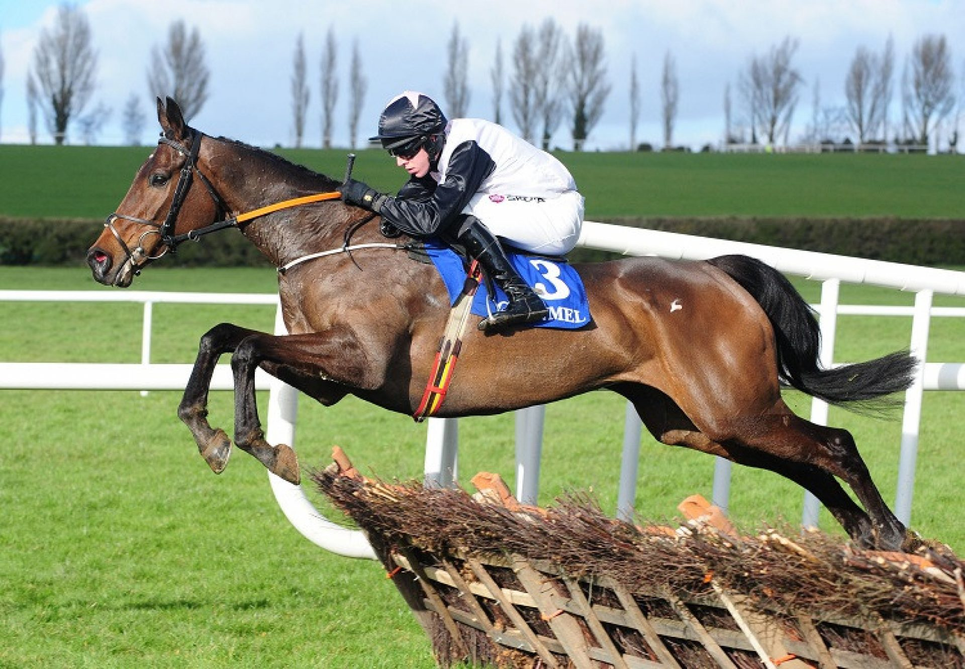 Chris's Dream (Mahler) winning the G3 Surehaul Mercedes-Benz Novice Hurdle at Clonmel