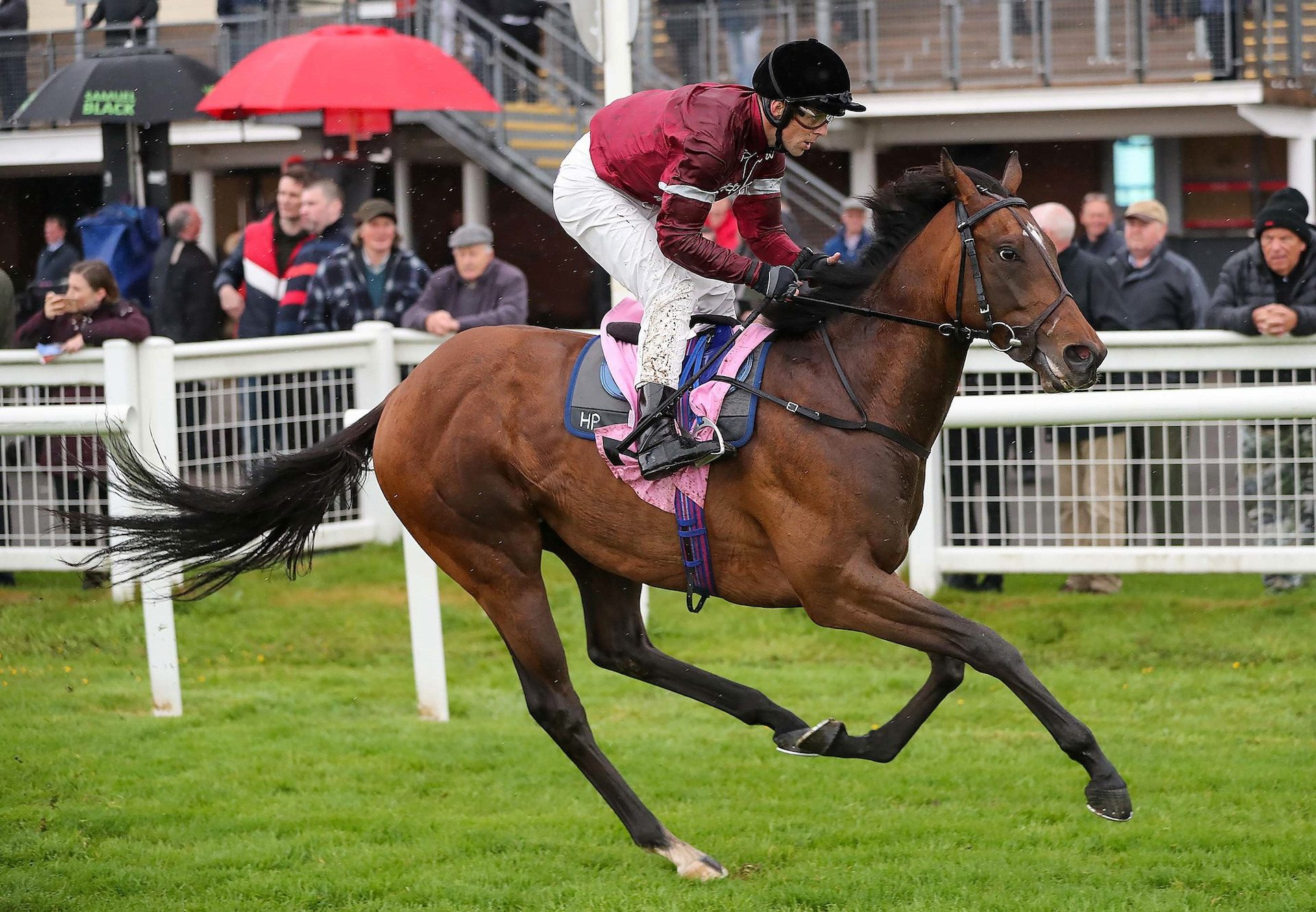 Coase Continues Fine Run For Zoffany