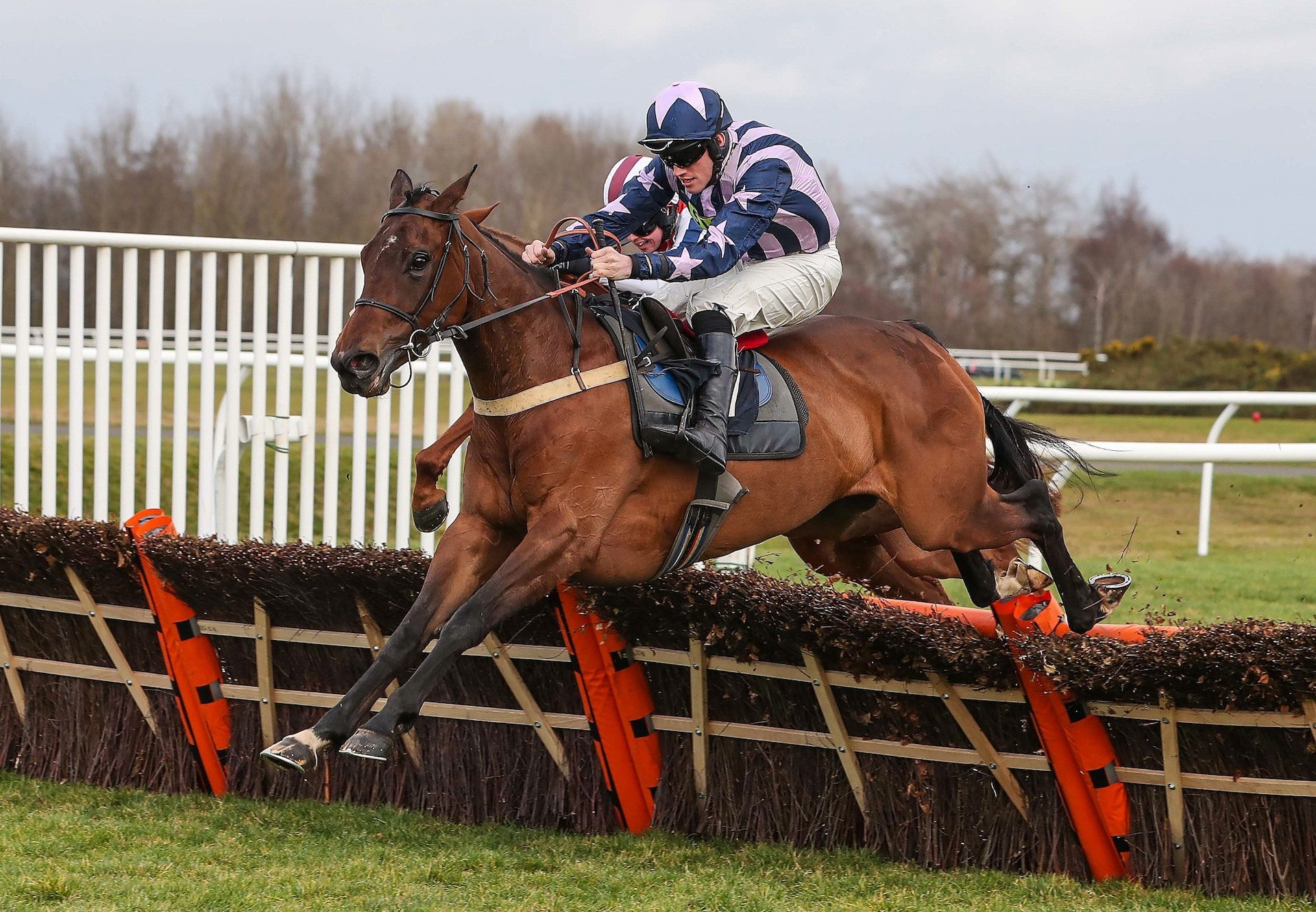 Copper Gone West (Westerner) Wins Her Maiden Hurdle At Musselburgh