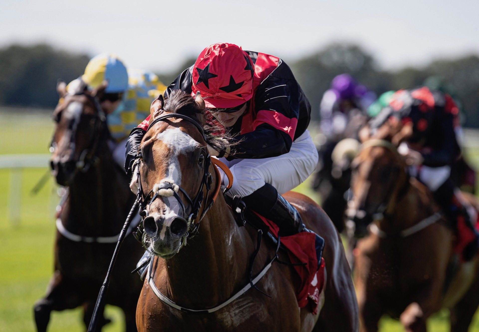 Current Option (Camelot) Wins The Listed Platinum Stakes at Cork