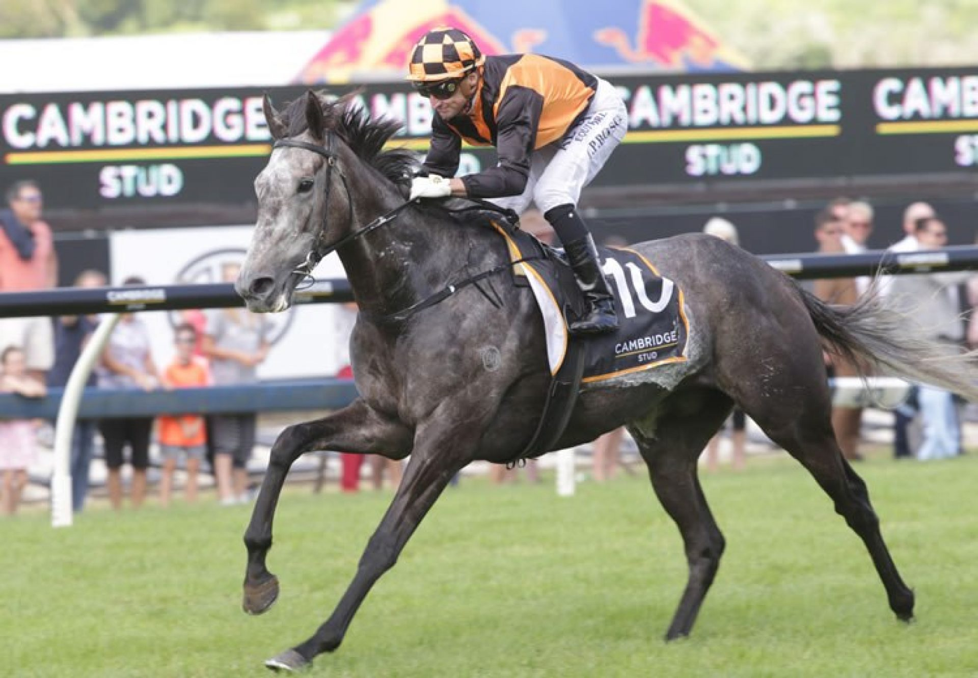 Danzdanzdance (Mastercraftsman) winning the G1 Zabeel Classic at Ellerslie