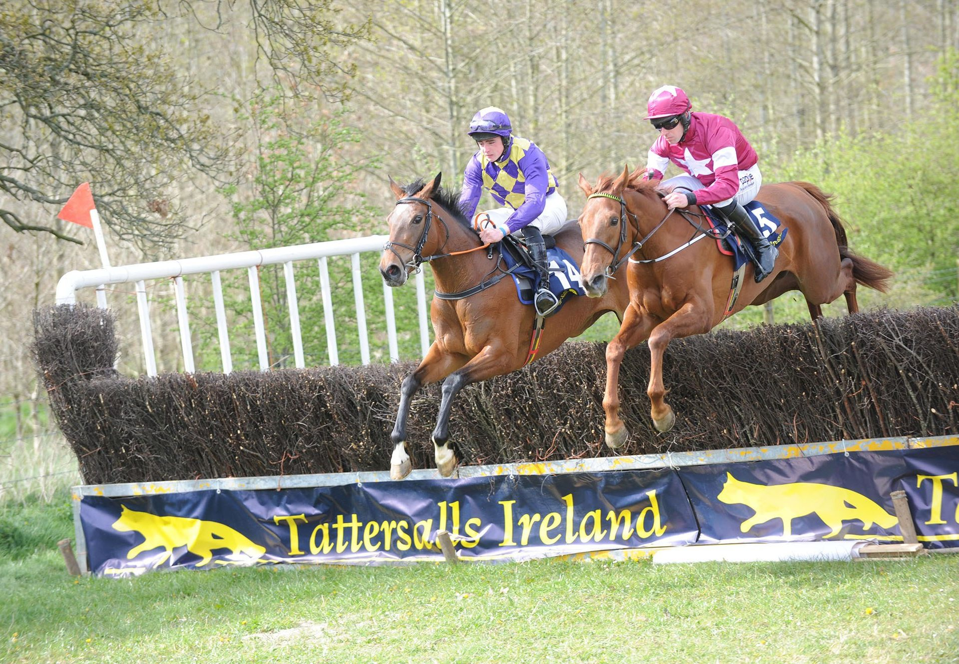 Domitian (Getaway) winning a 4yo mares maiden at Bellurgan Park