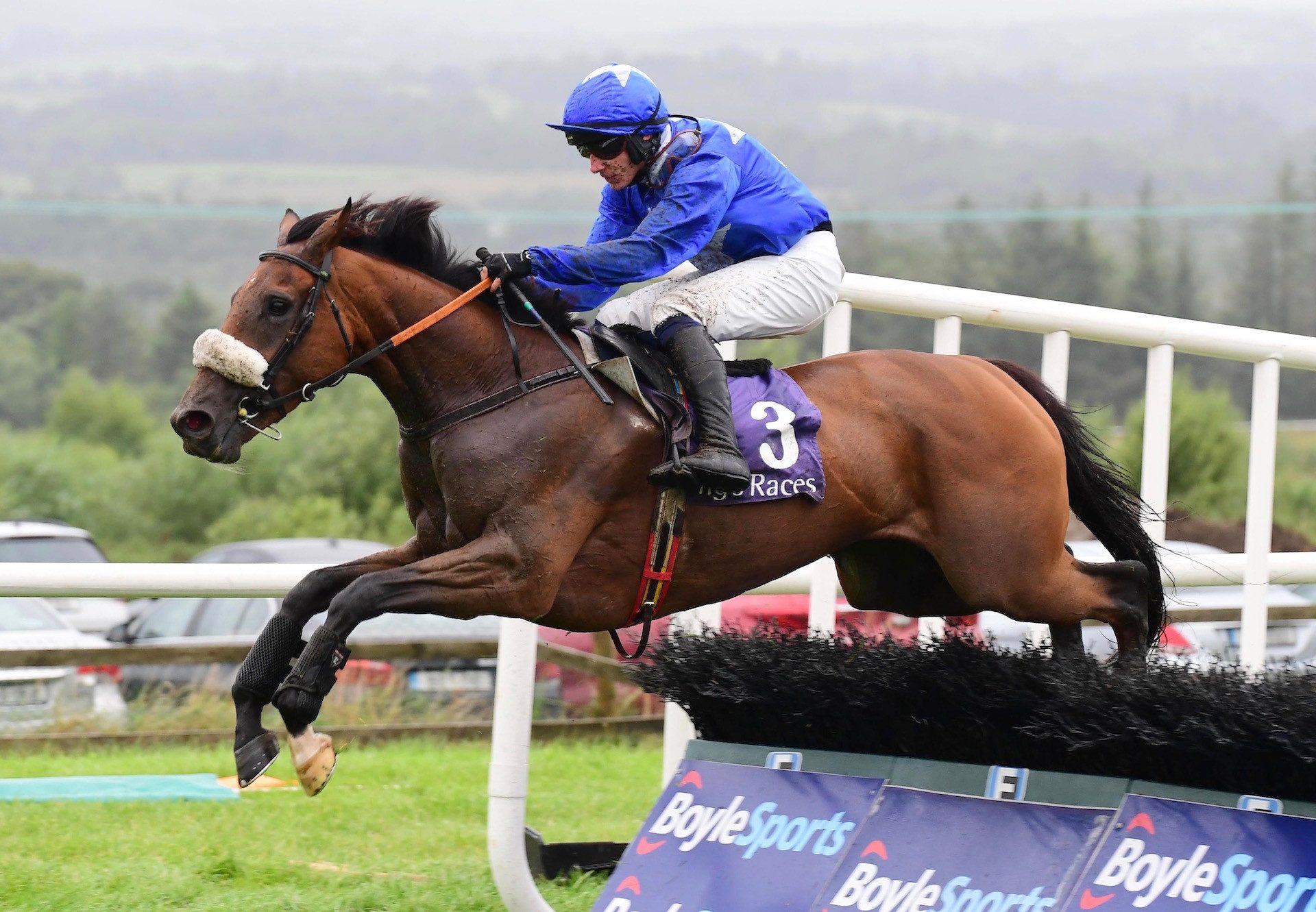 Trevanna (Requinto) winning an auction race at Naas
