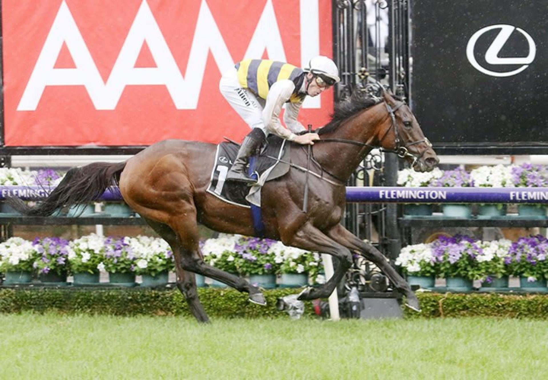 Downdraft (Camelot) winning the Gr.3 Hotham Handicap at Flemington