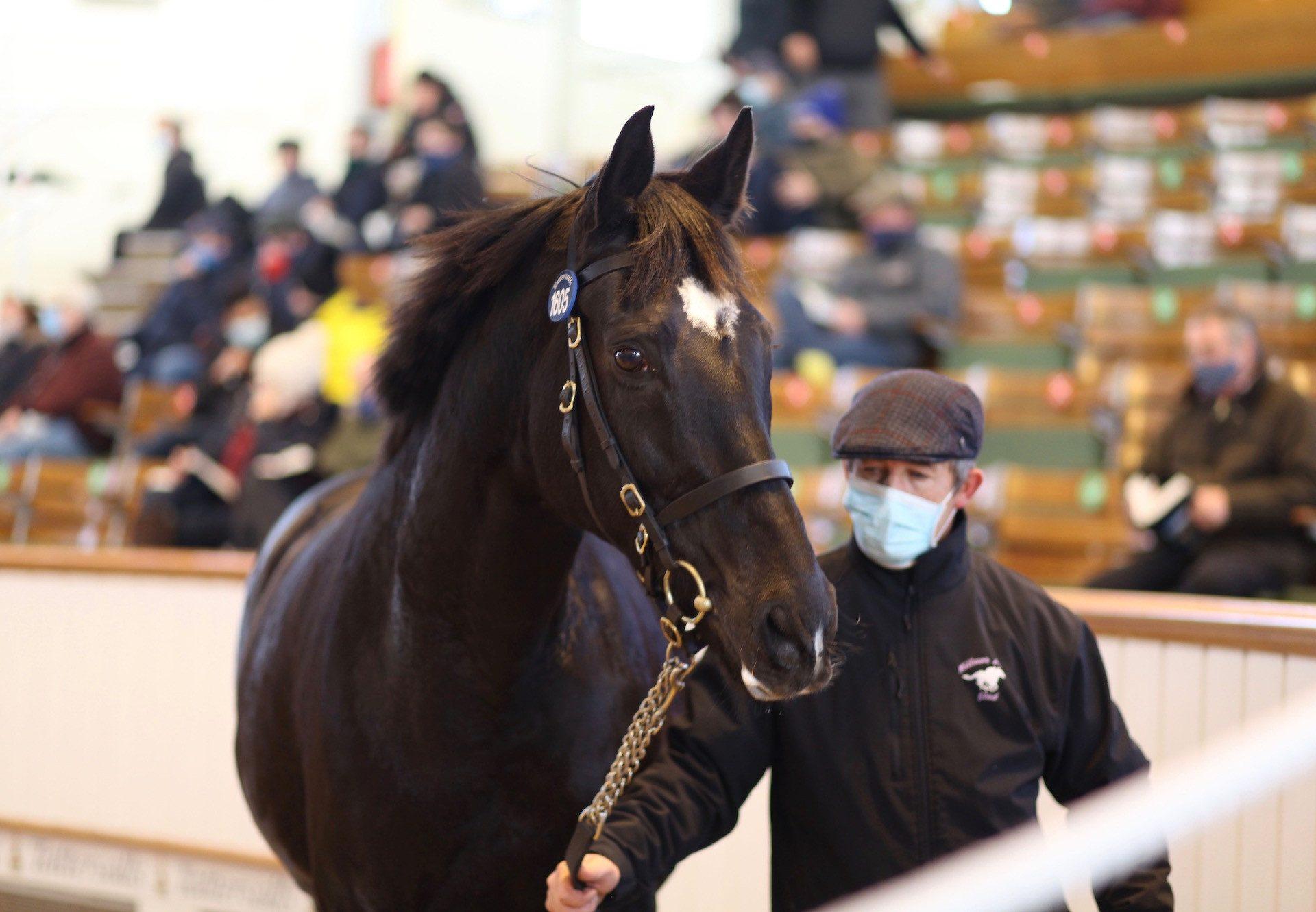 Dulkashe Sells In Foal To Churchill at Tattersalls