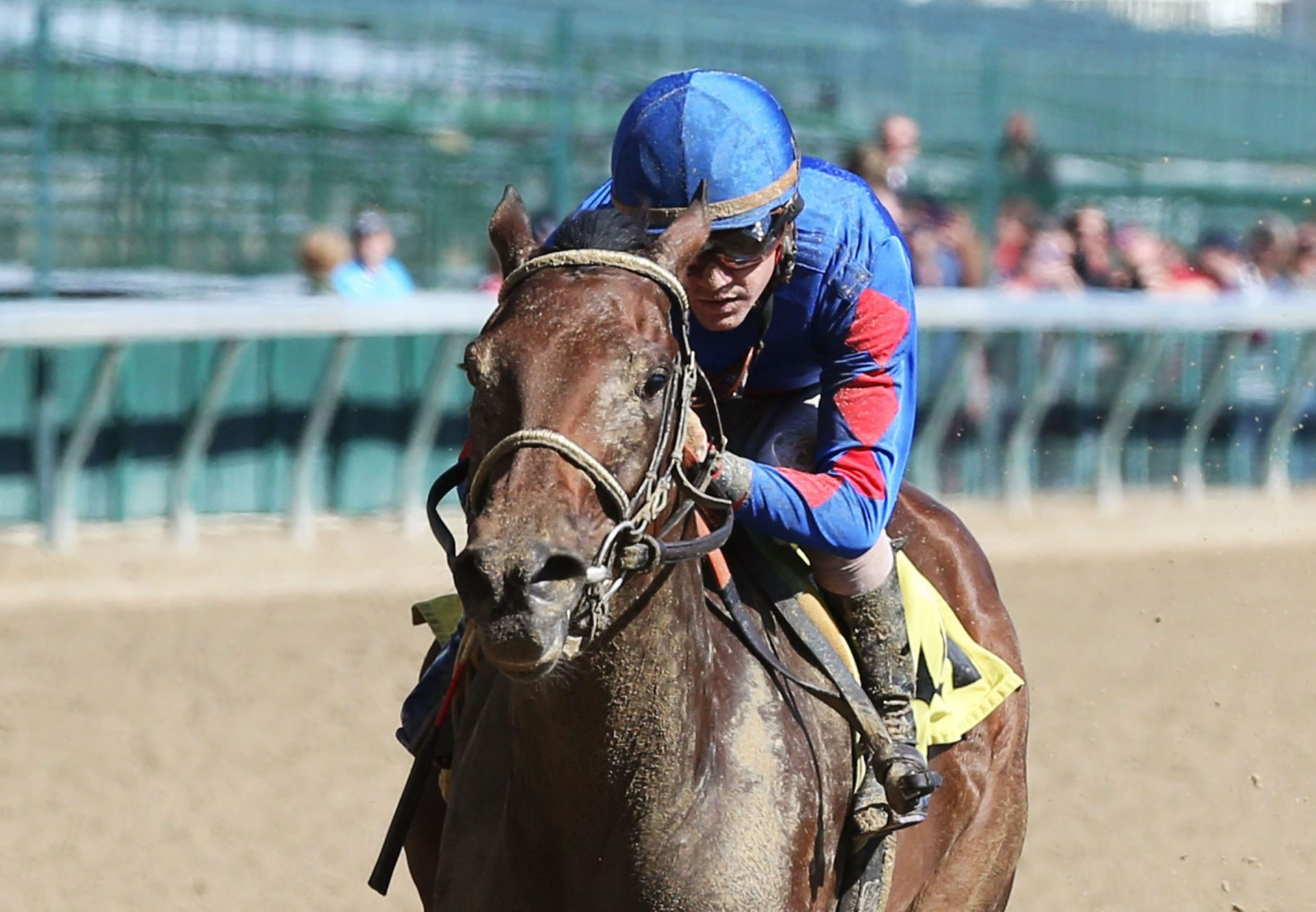 Emilys Oasis (American Pharoah) Breaking Maiden At Churchill Downs
