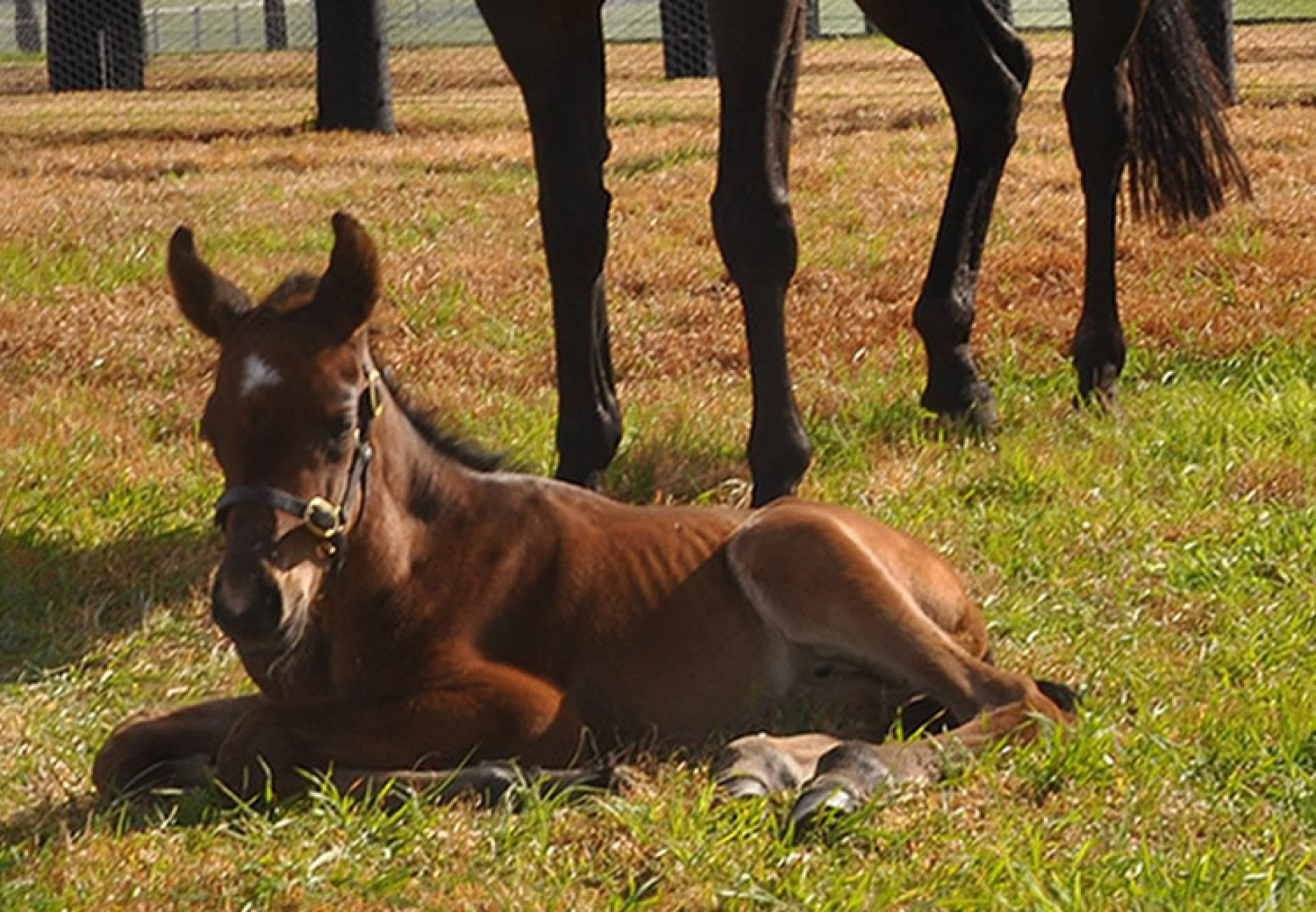 American Pharoah ex Lake Geneva filly foal
