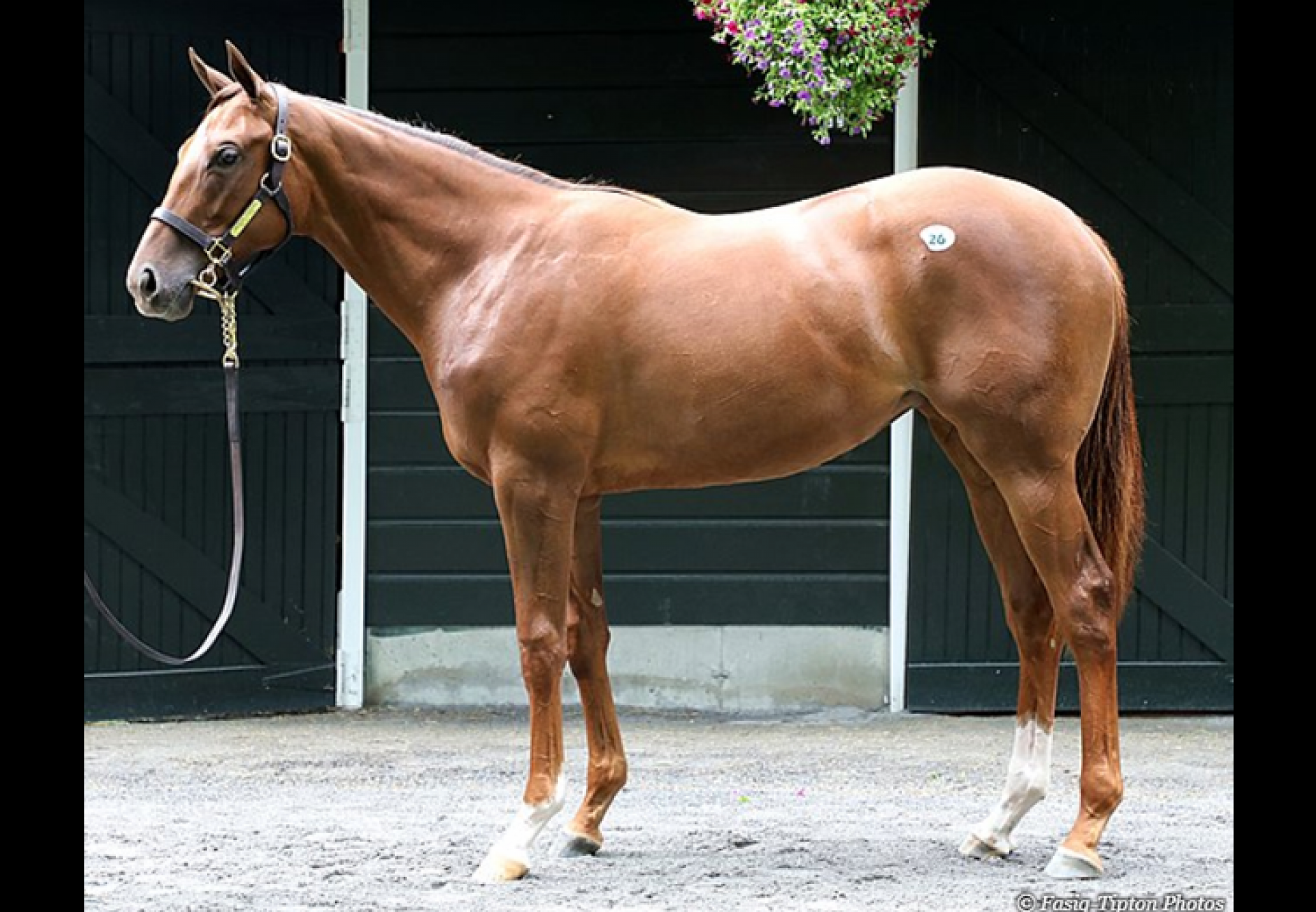 American Pharoah ex Life At Ten yearling filly