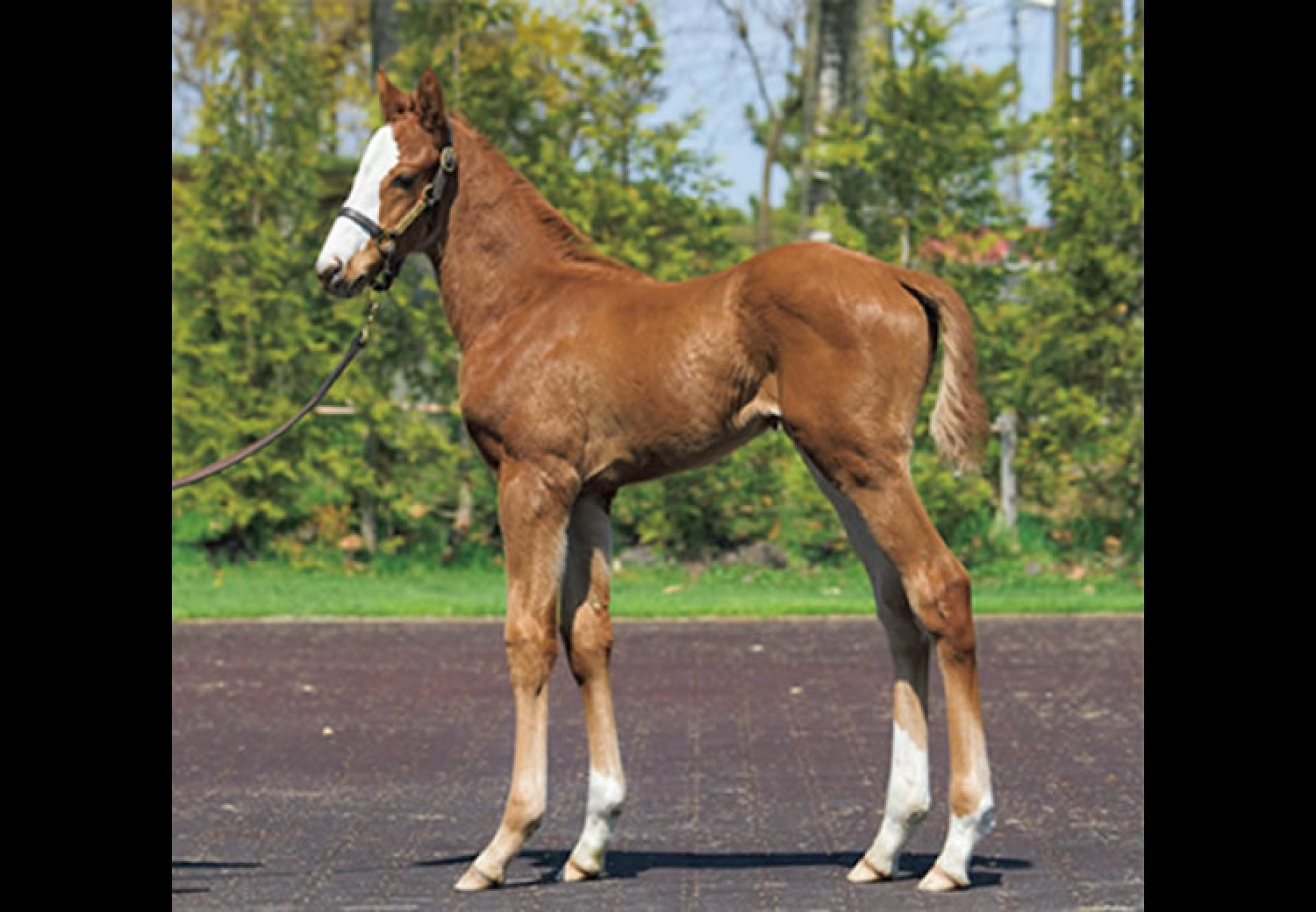 Justify ex Not Now Carolyn filly foal