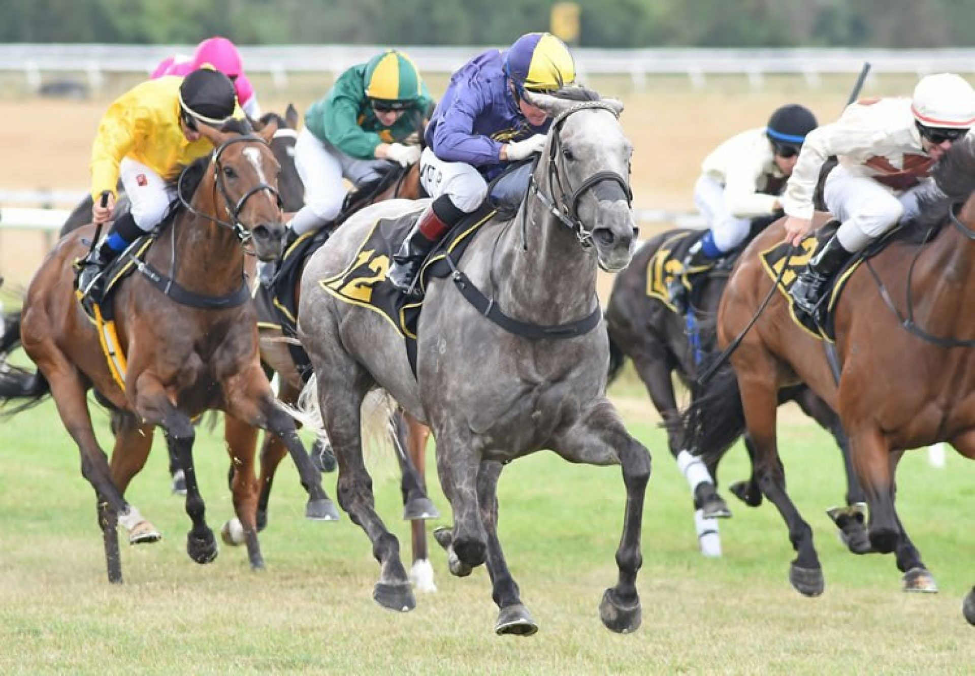 Flavigny (Mastercraftsman) winning the Listed WRC/Pope & Gray Contractors Thoroughbred Breeders' Stakes at Tauherenikau