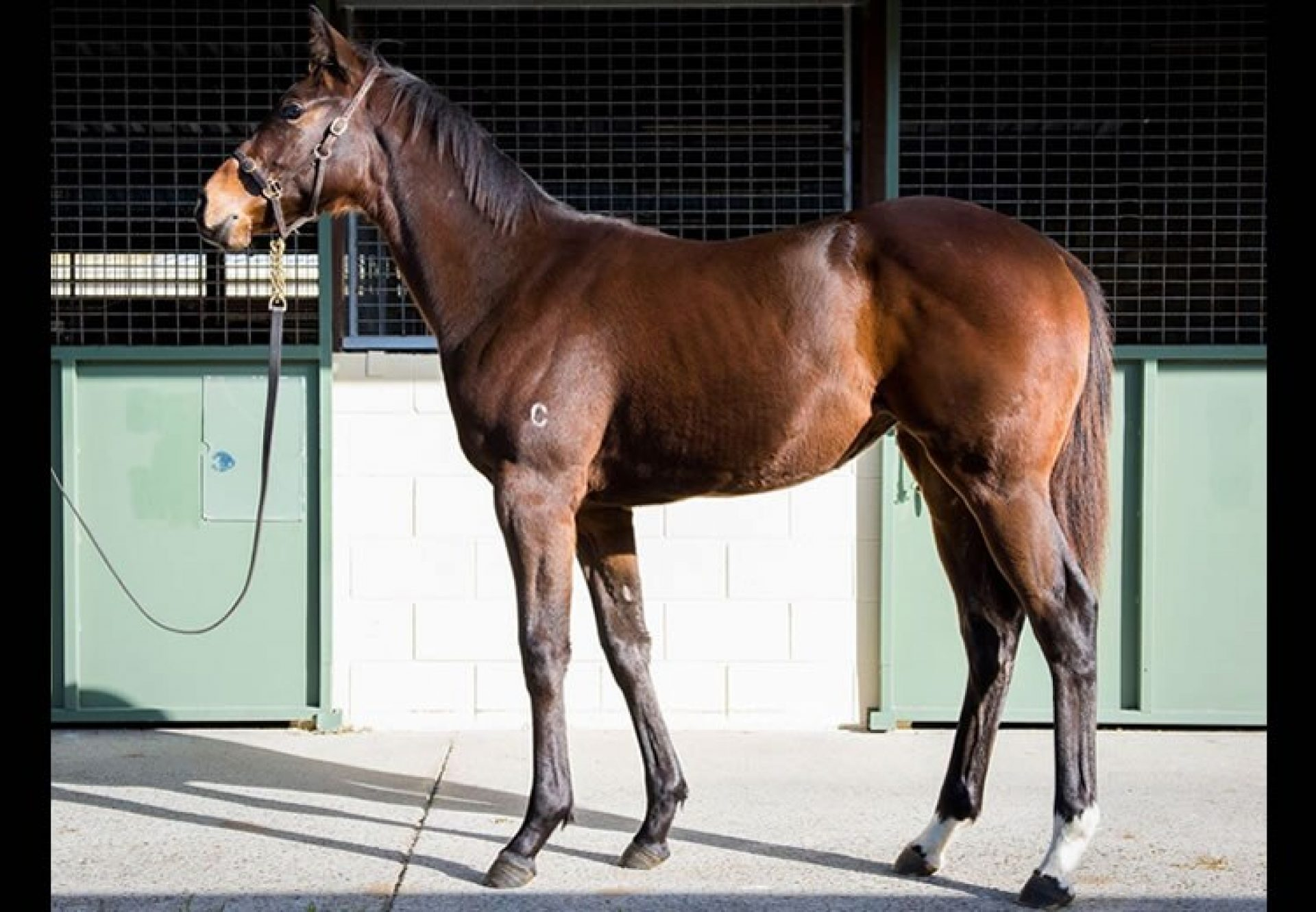 Vancouver ex Better Alternative filly selling for $625,000 at the Magic Millions Weanling Sale