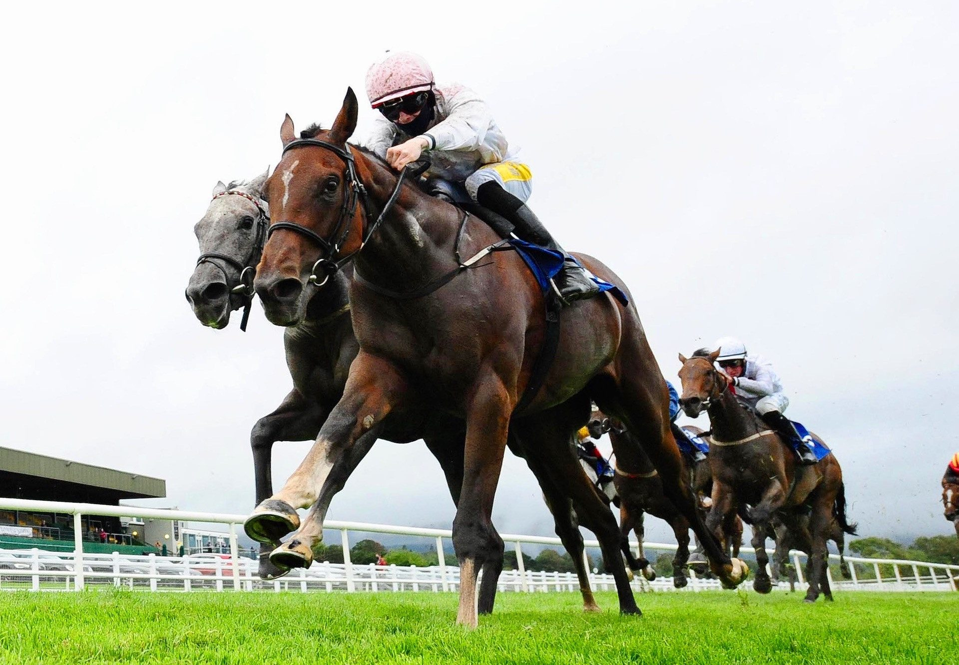 Fearless Girl (Holy Roman Emperor) Wins Her Maiden At Killarney