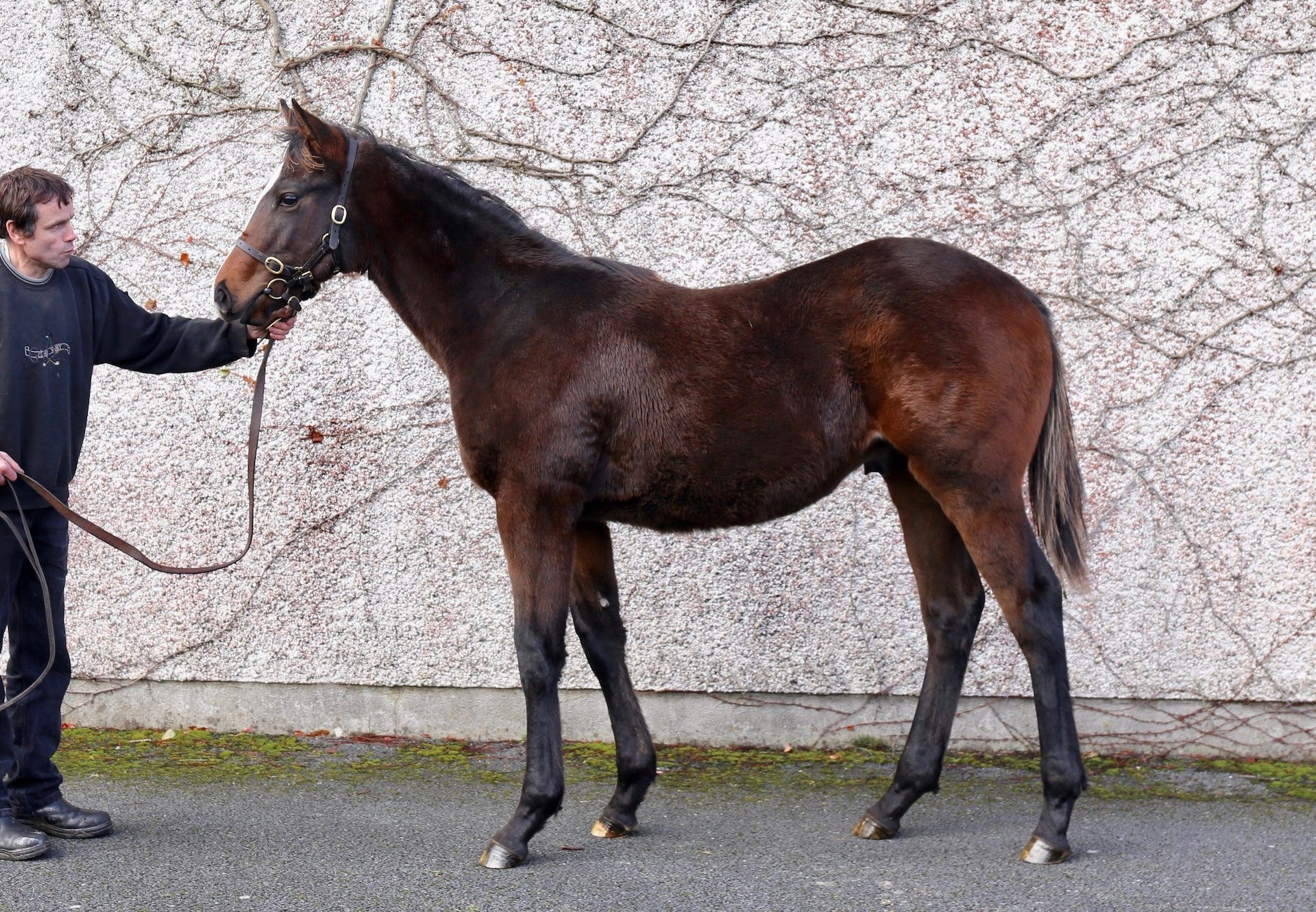 Footstepsinthesand Colt Ex Queen Of Carthage