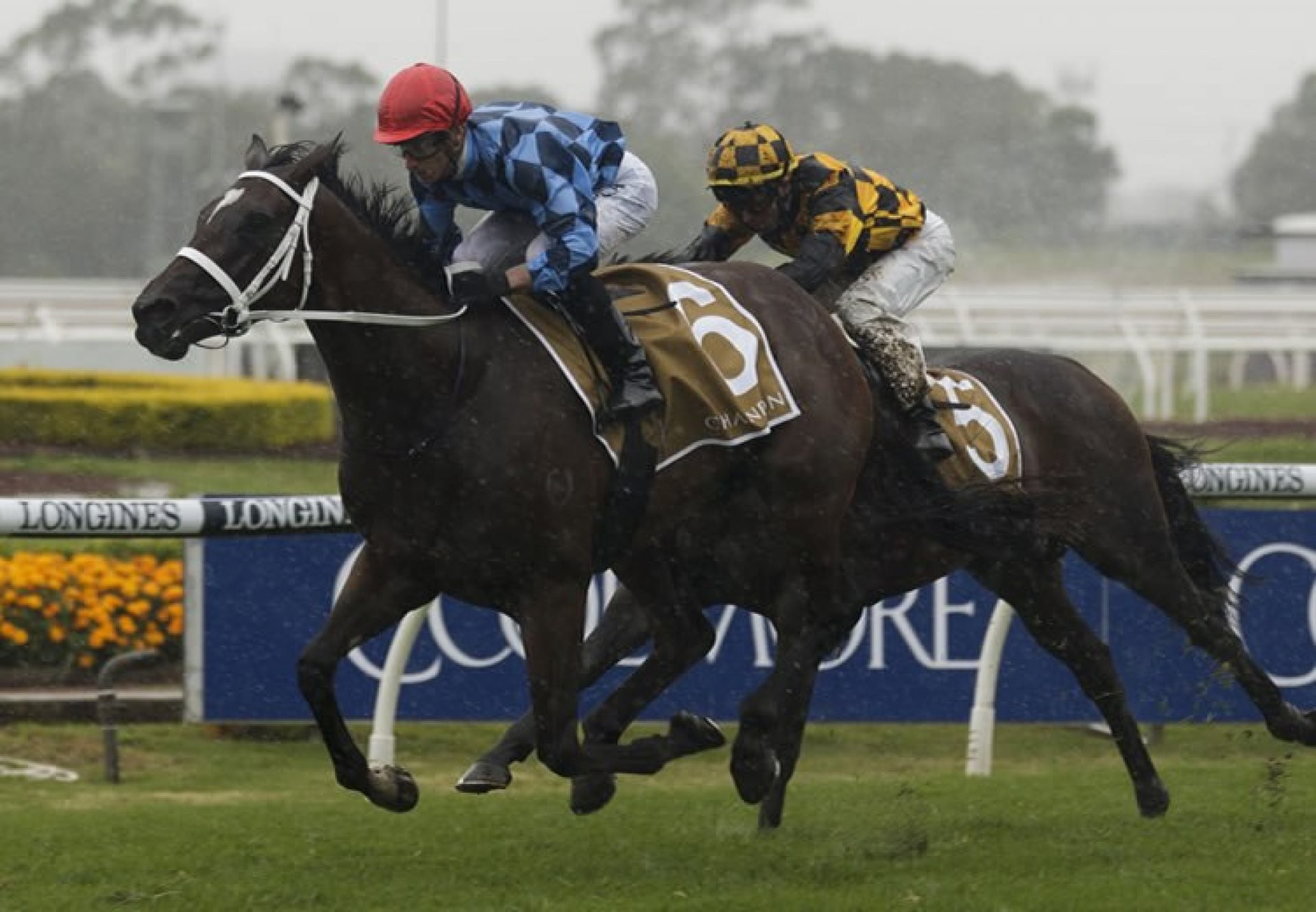 Funstar (Adelaide) winning the Gr.2 Phar Lap Stakes at Rosehill