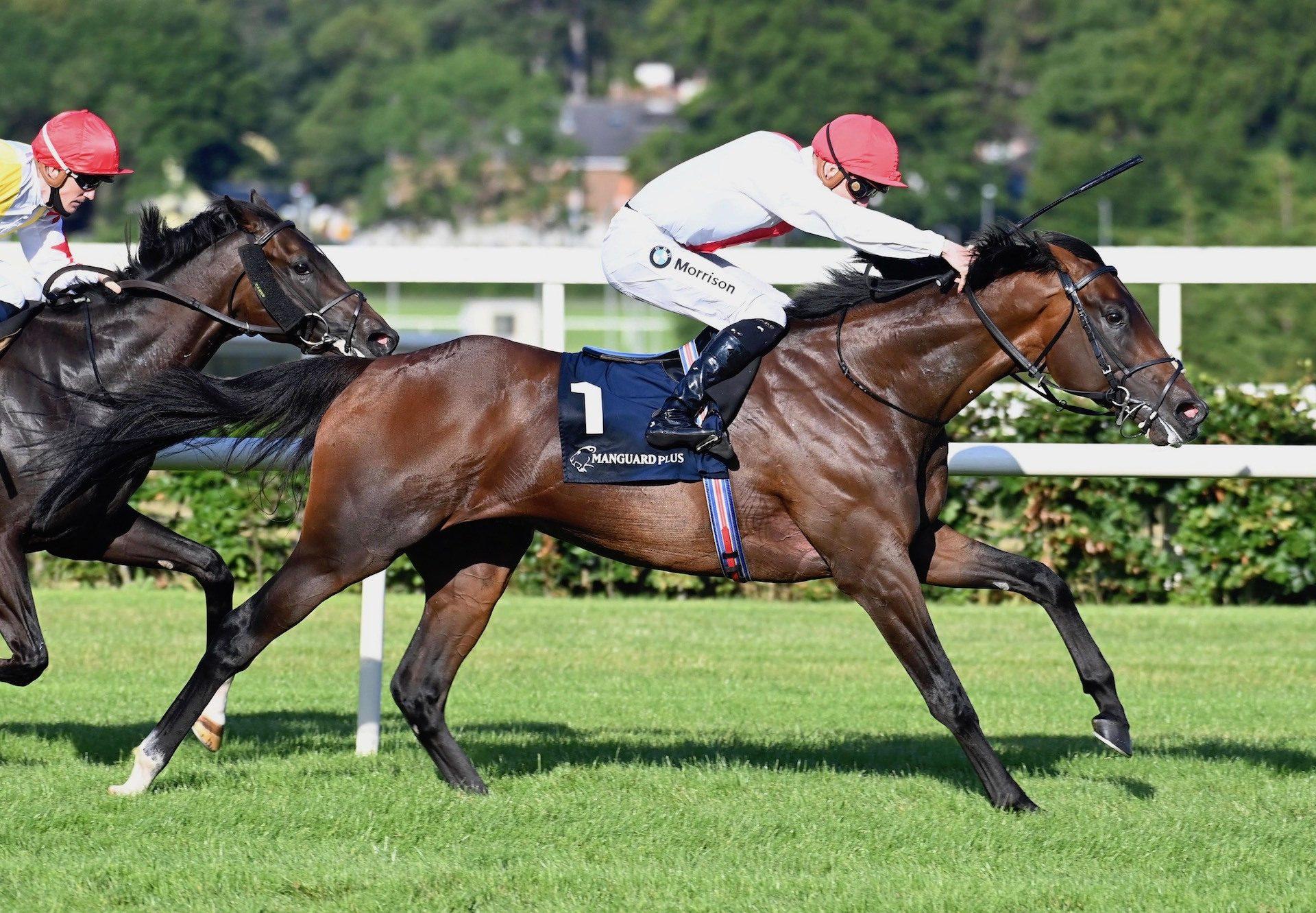 Gaheris (Camelot) Wins The Manguard Plus Maiden At Leopardstown
