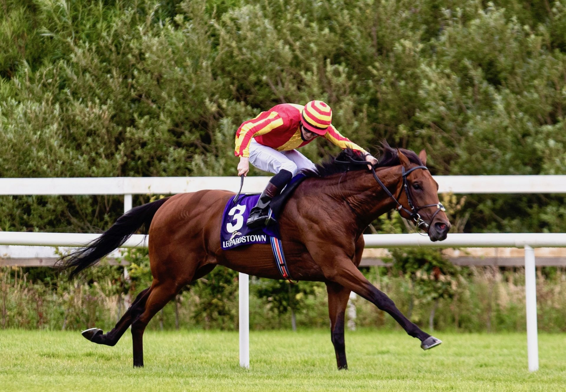 Galileo Chrome Wins At Leopardstown 1