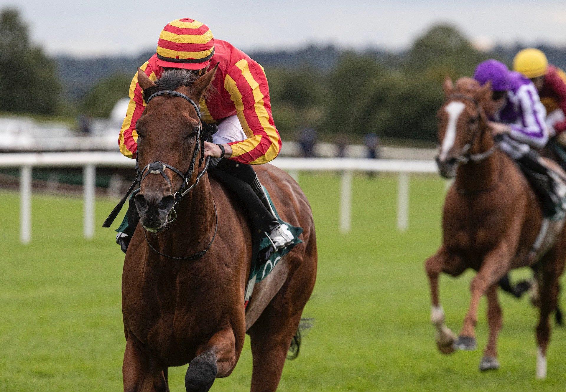 Galileo Chrome (Australia) Wins The Listed Yeats Stakes at Navan