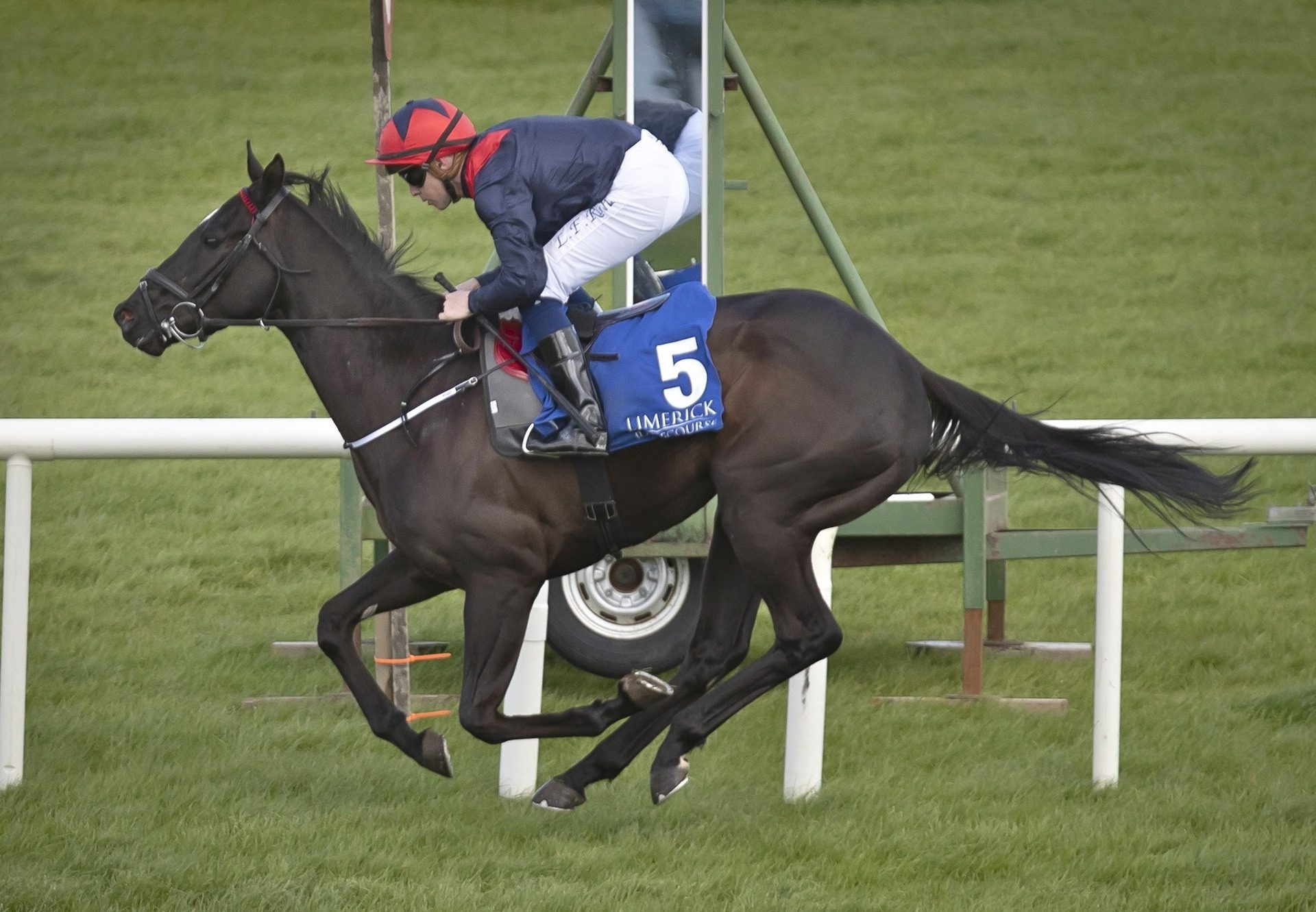 Geneticist (Footstepsinthesand) Impresses At Limerick